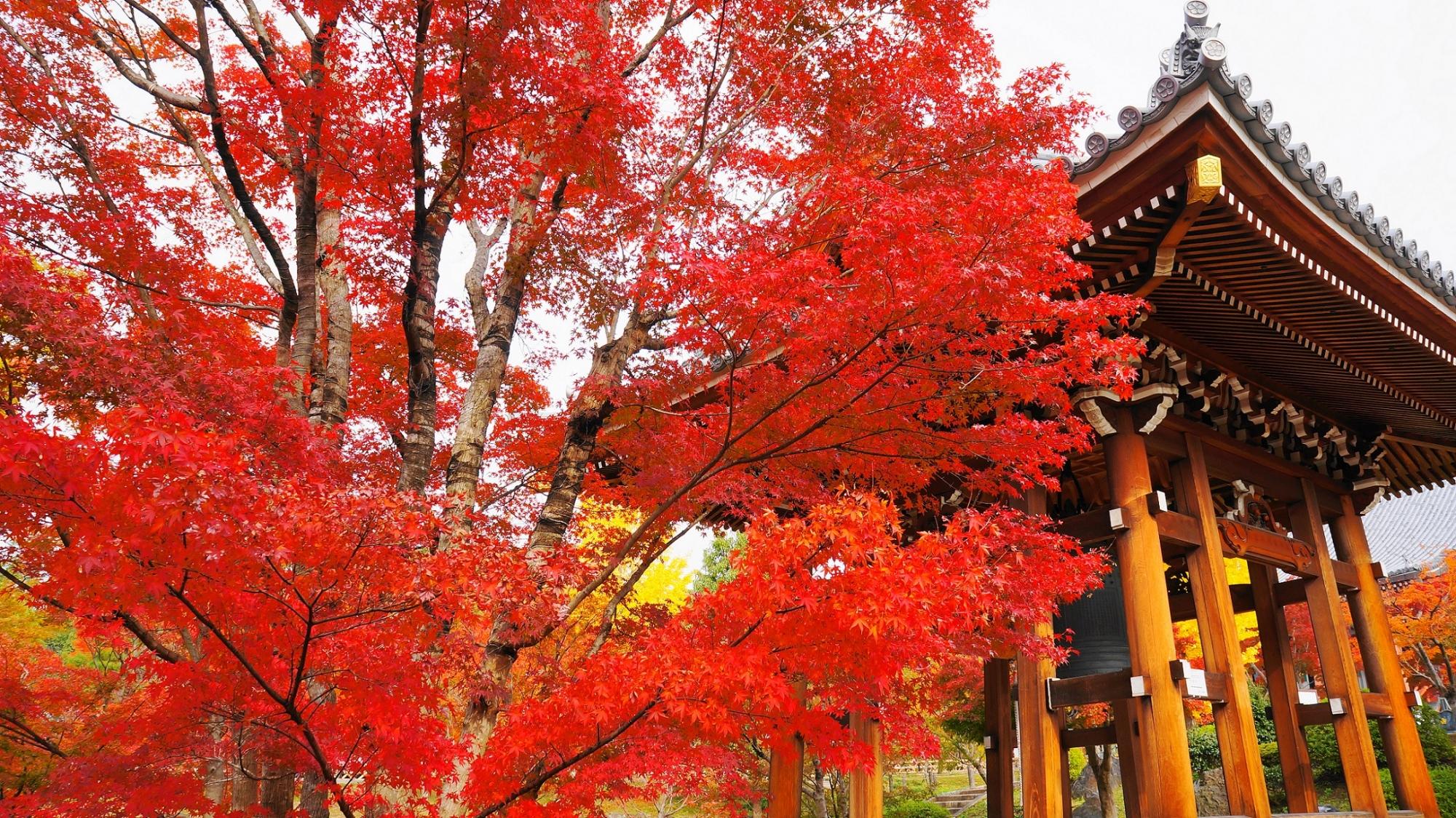 智積院の鐘楼を鮮やかに彩る炎のような赤い紅葉