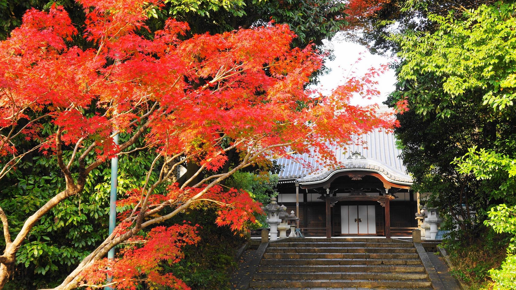 智積院の大師堂と紅葉