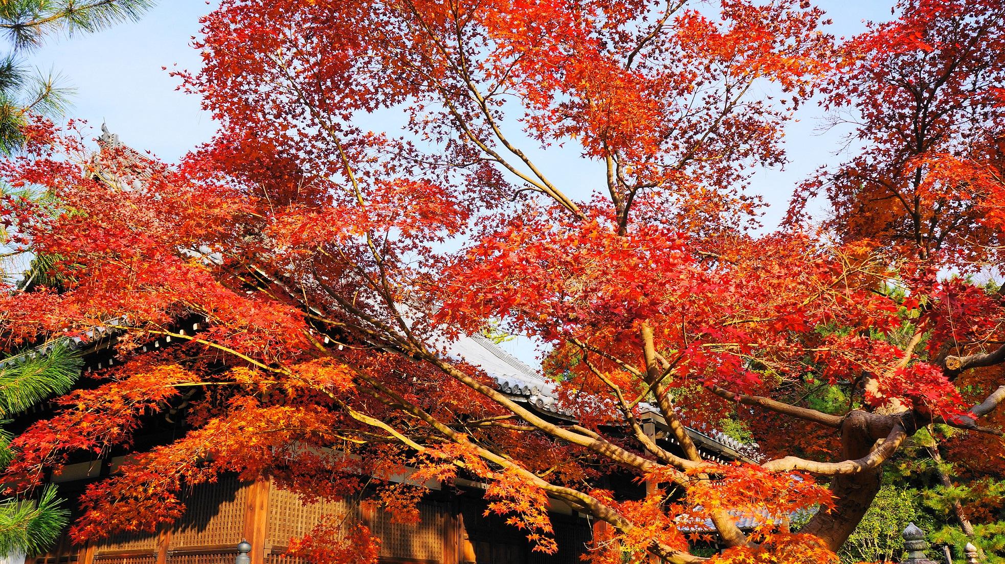 溢れる紅葉に染まる智積院の密厳堂