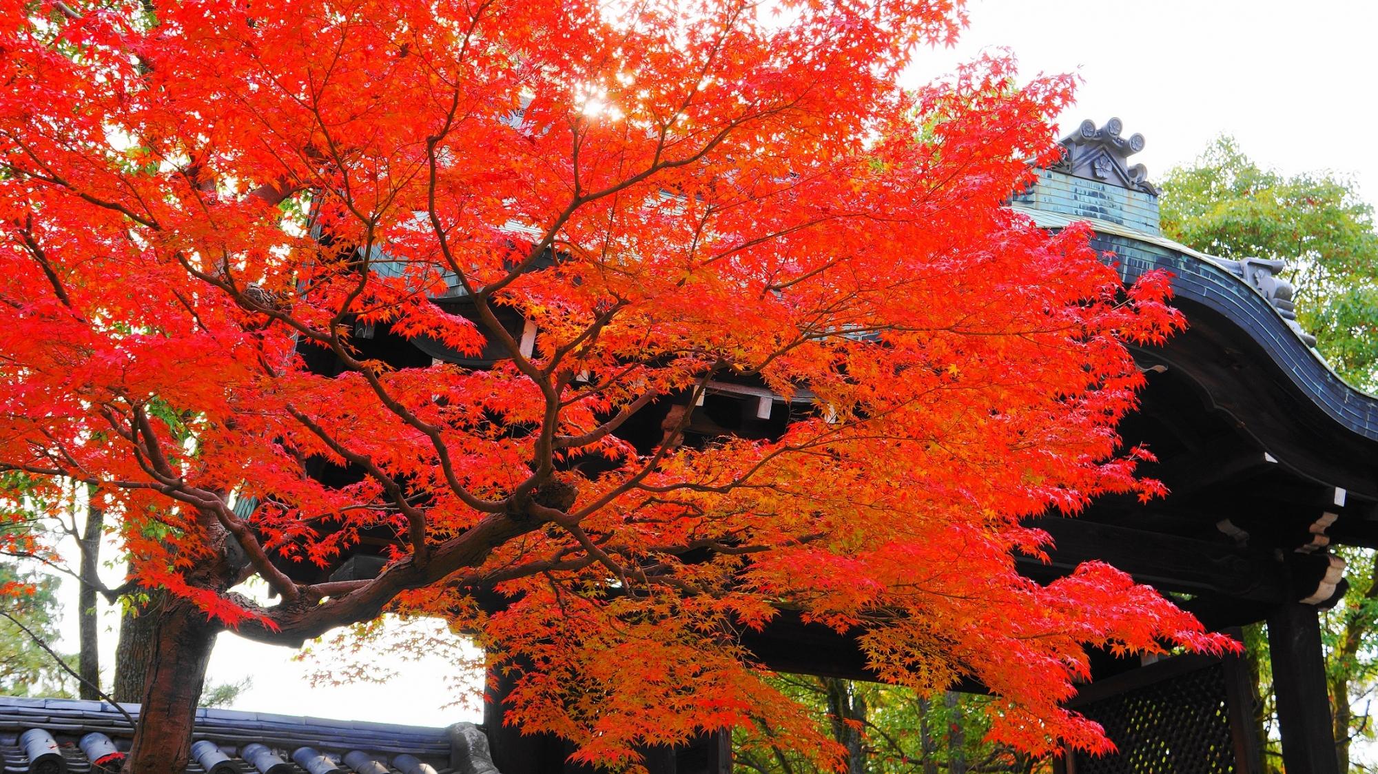 唐門を優雅に染める鮮やかな朱色の紅葉