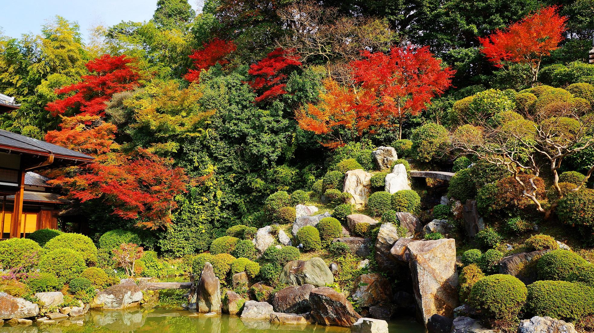 優雅で力強い庭園で色づく多彩な紅葉