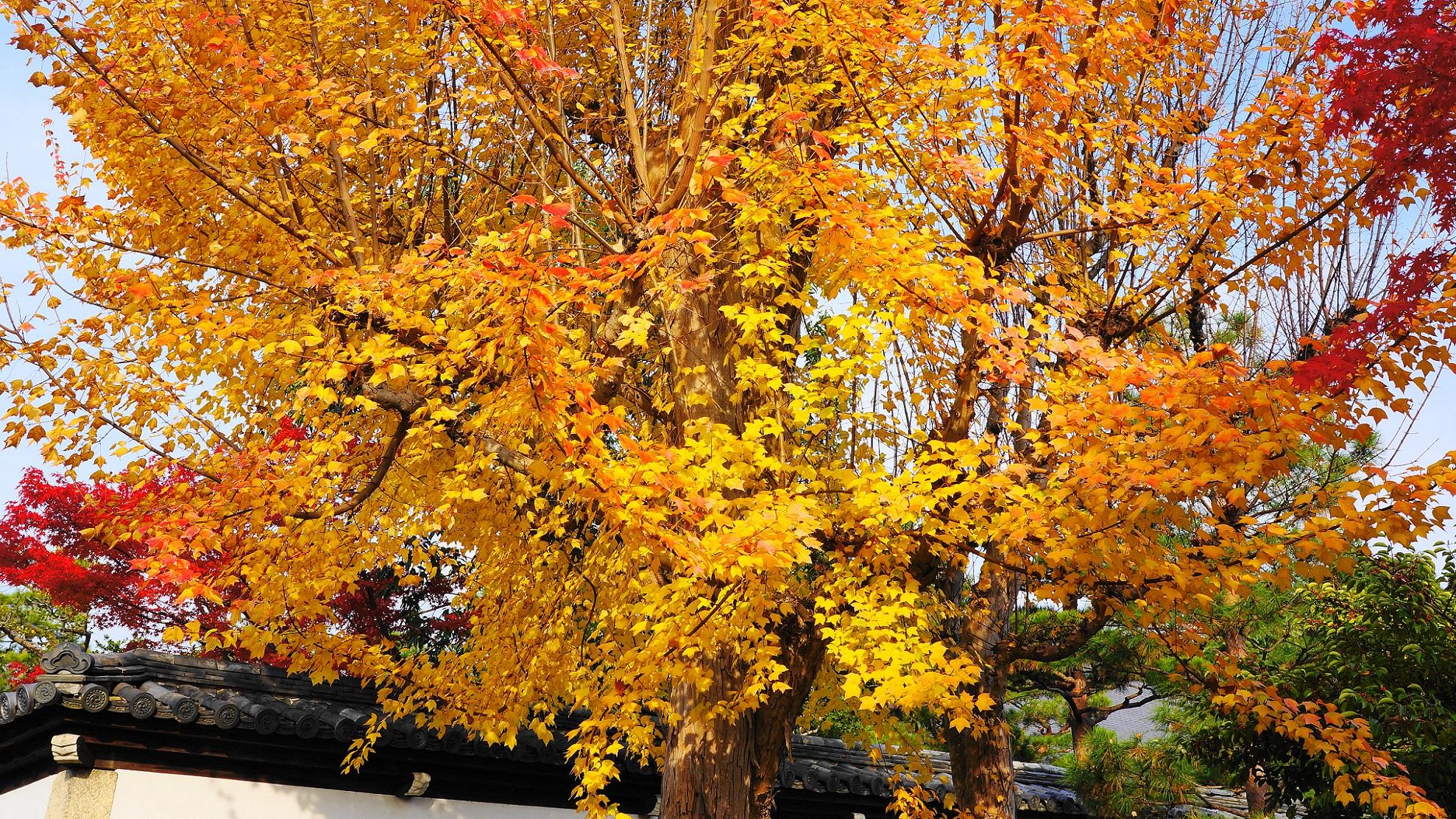 赤色と黄色がなぜか混ざる自然の織り成す不思議な秋色