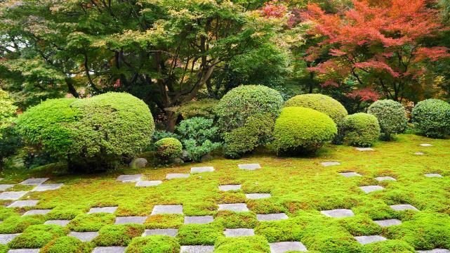 Kyoto Tofuku-ji Temple Hojyo-Garden autumn leaves moss 東福寺 方丈庭園 北庭 見ごろ