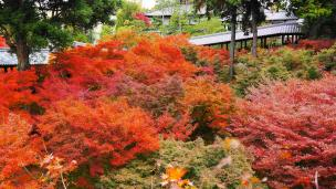 Tofukuji-Temple Hojo-Garden colored leaves Kyoto 通天台 紅葉 見ごろ 通天橋
