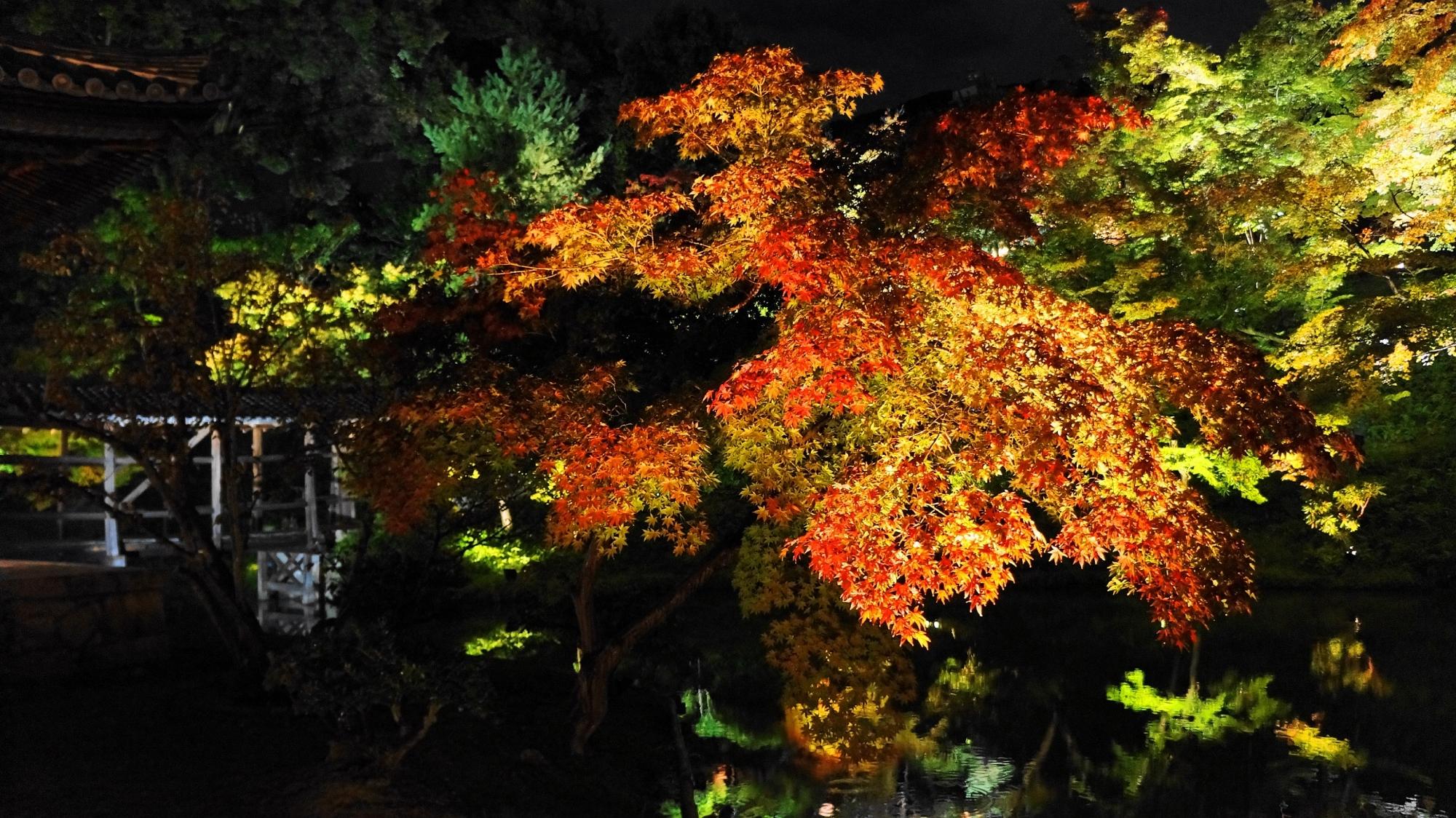 高台寺 庭園 臥龍池 紅葉 ライトアップ