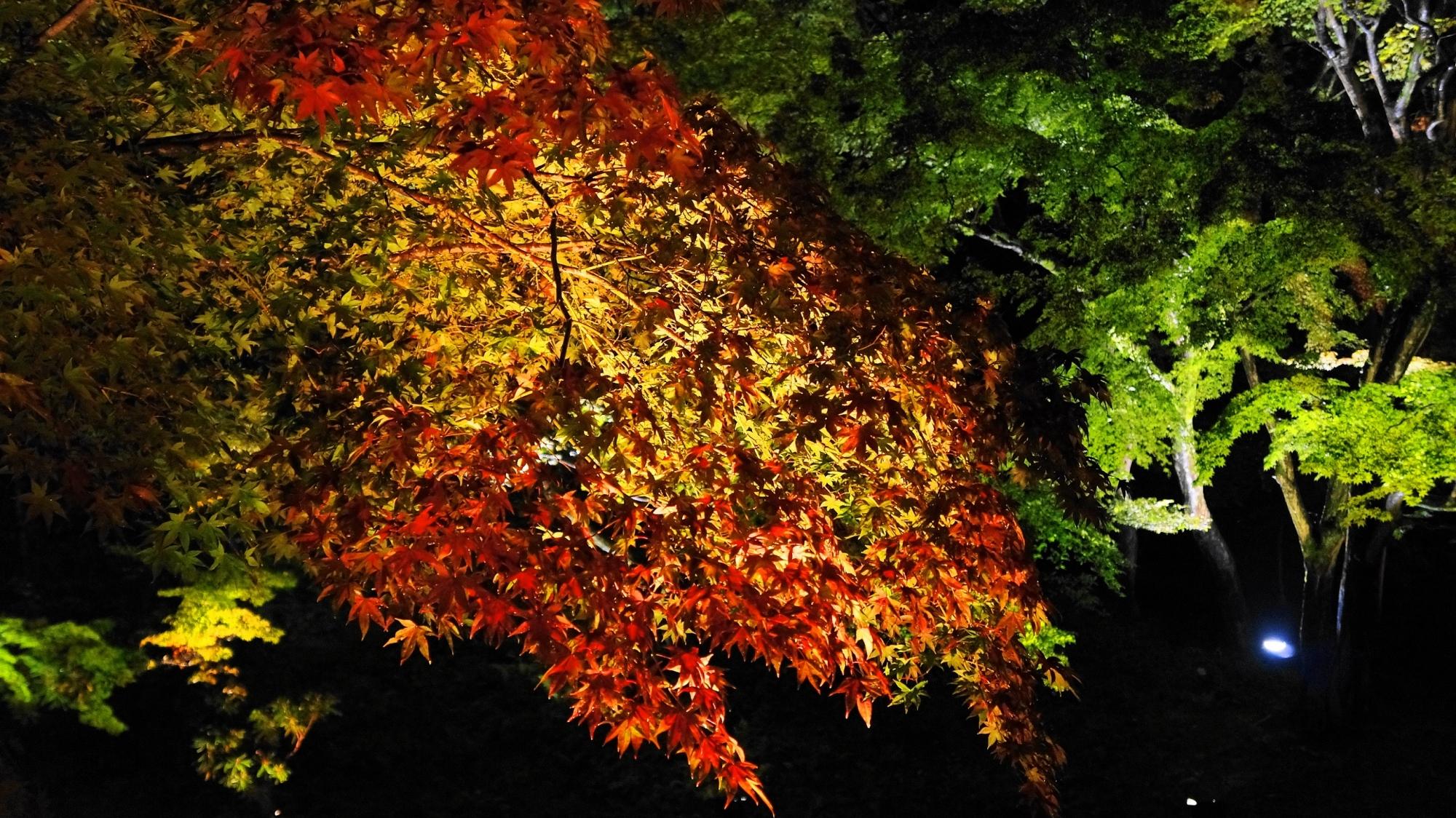 がりゅうち 紅葉 ライトアップ 高台寺 庭園