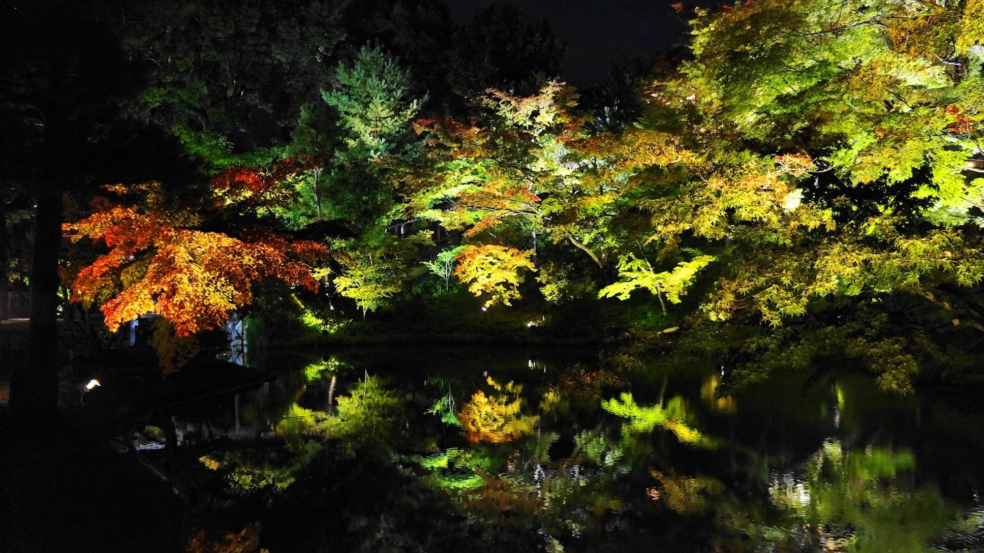 高台寺 庭園 臥龍池 ライトアップ 紅葉