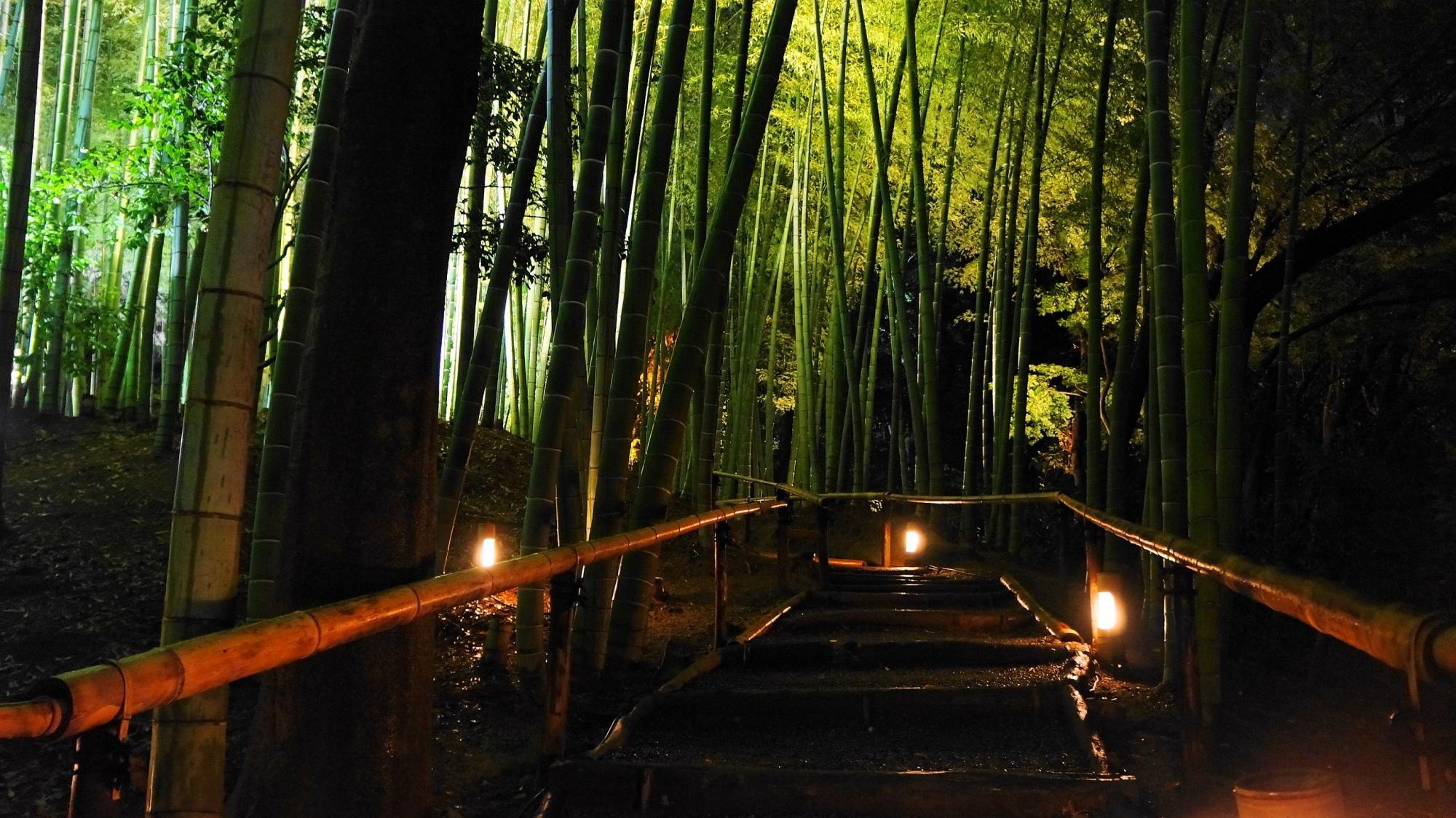 京都高台寺の竹林の幻想的なライトアップ