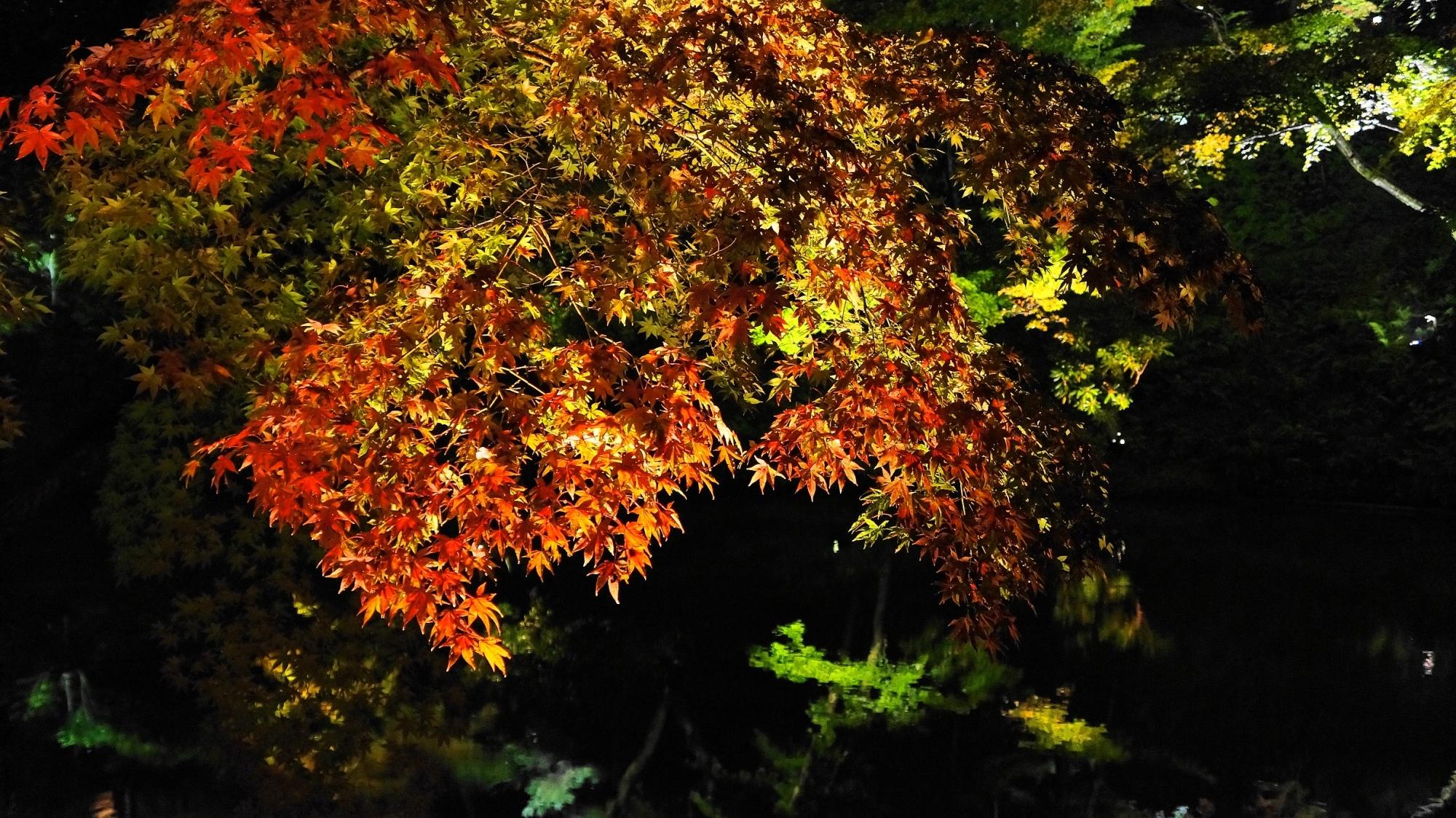 Kodaiji-Temple Kyoto 紅葉 ライトアップ 臥龍池 高台寺