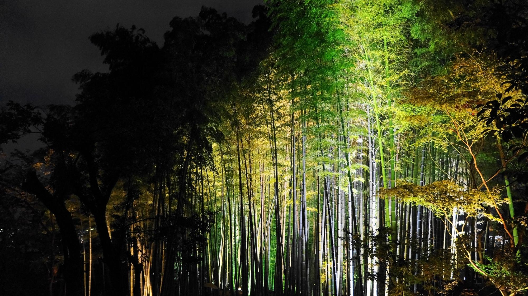 高台寺の竹林の優美なライトアップ