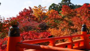 Kurama-dera Temple Kyoto autumn leaves 鞍馬寺 本殿 見頃 紅葉