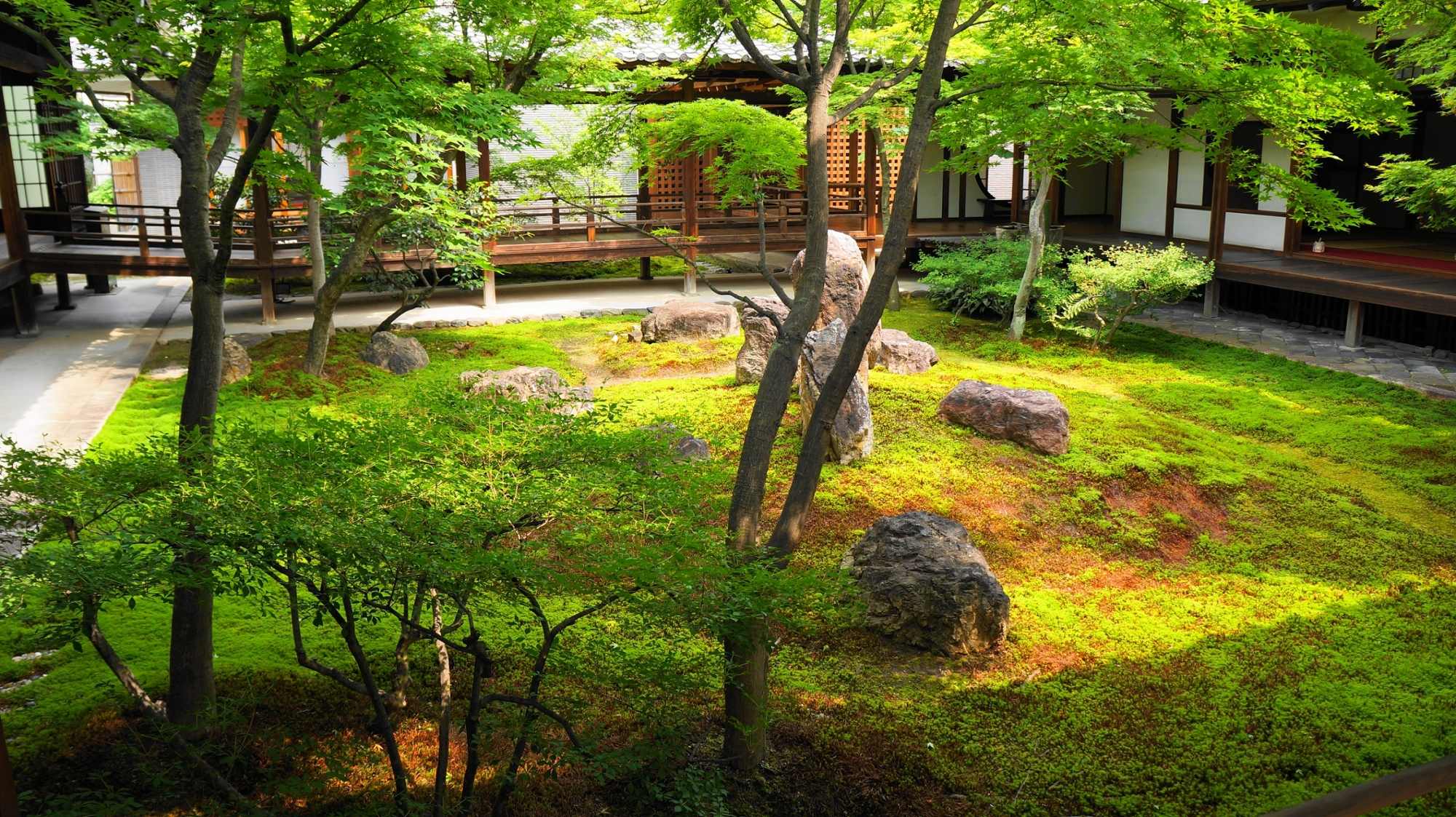 建仁寺の潮音庭の美しい新緑と苔