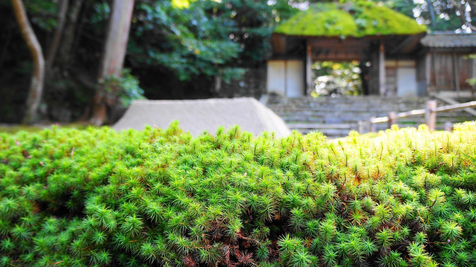 法然院の緑の苔と山門