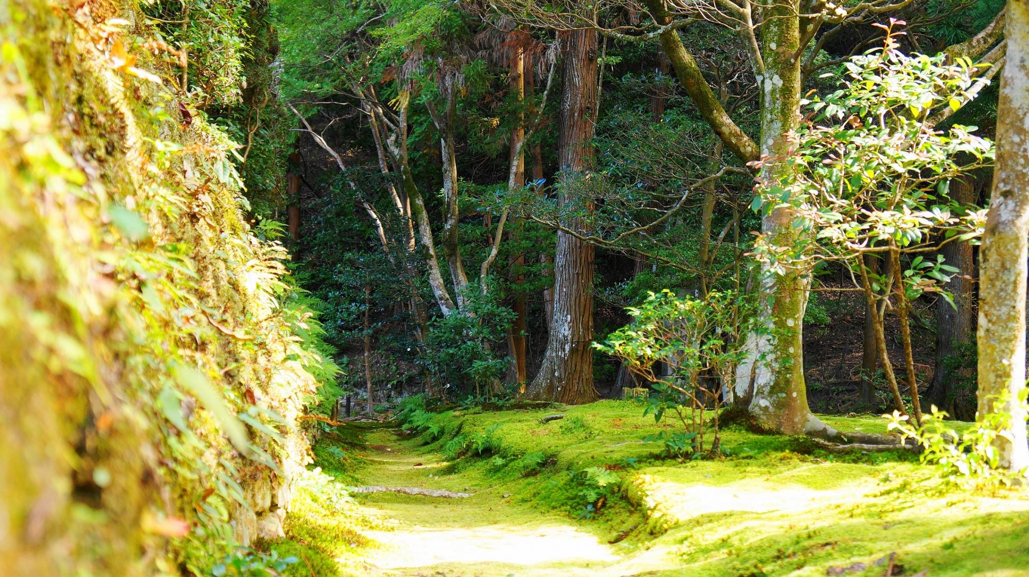 法然院の美しい苔とシダ(本堂横)
