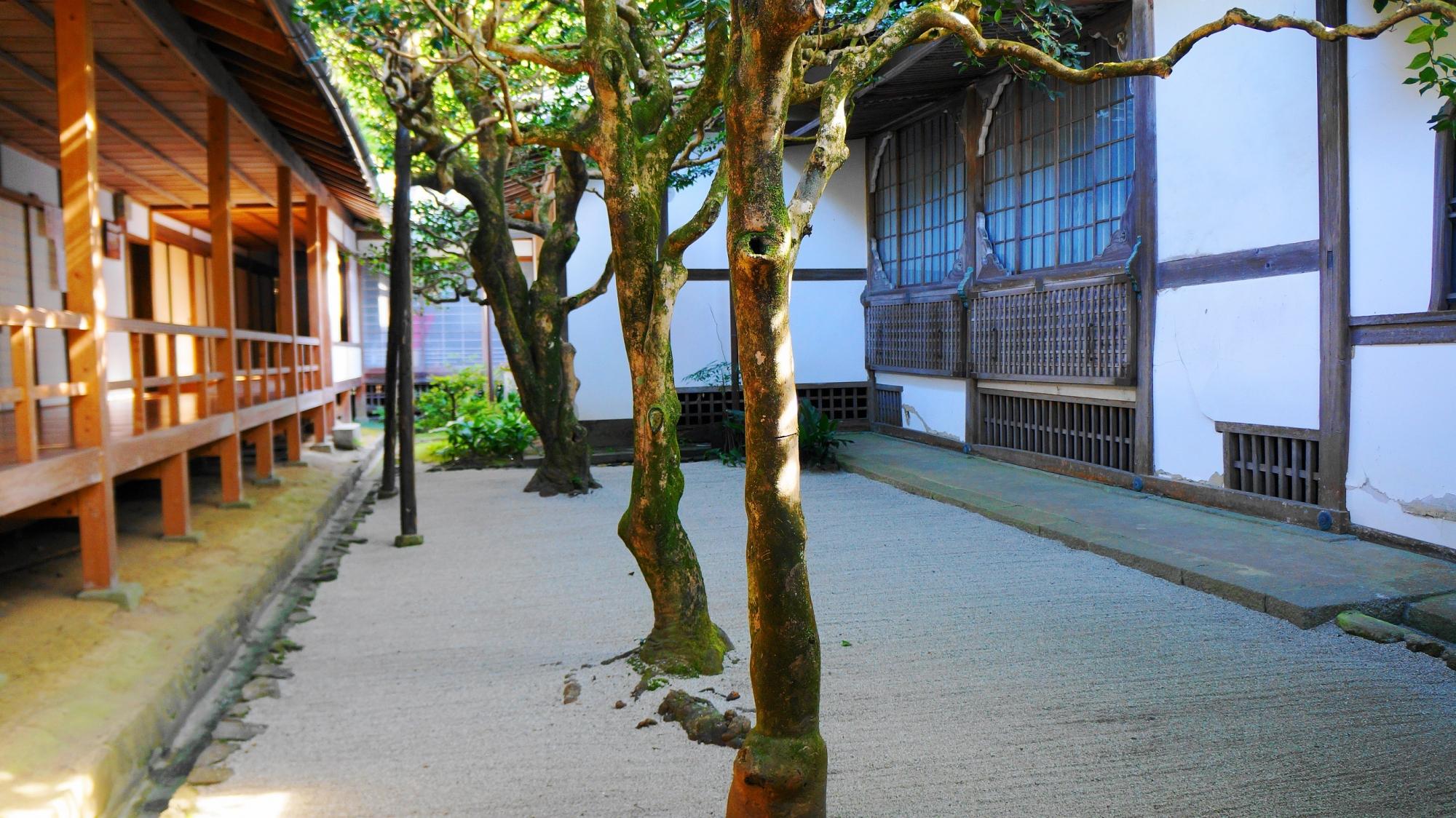 法然院の三銘椿の庭