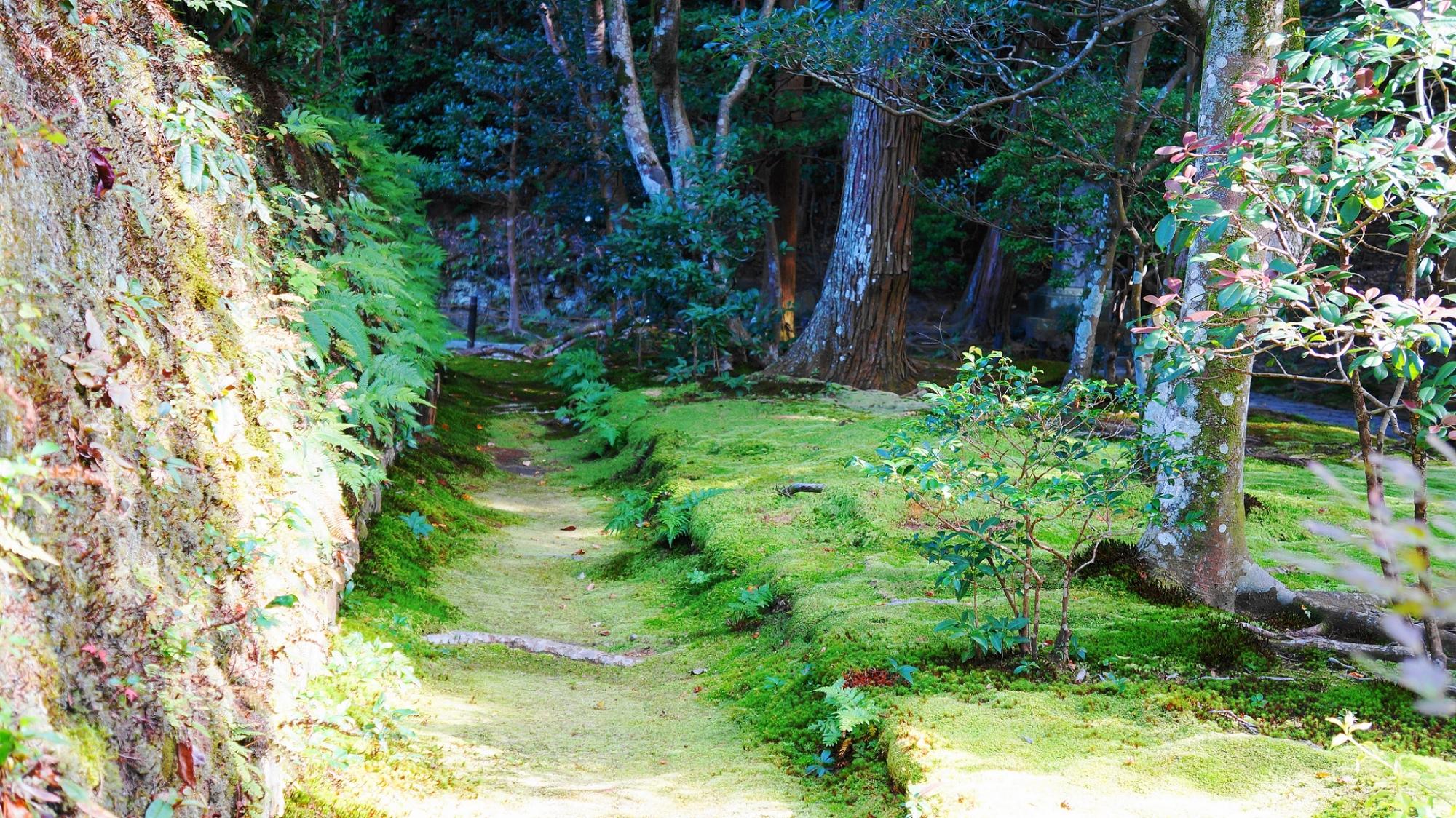 紅葉の名所の法然院の緑の苔とシダ