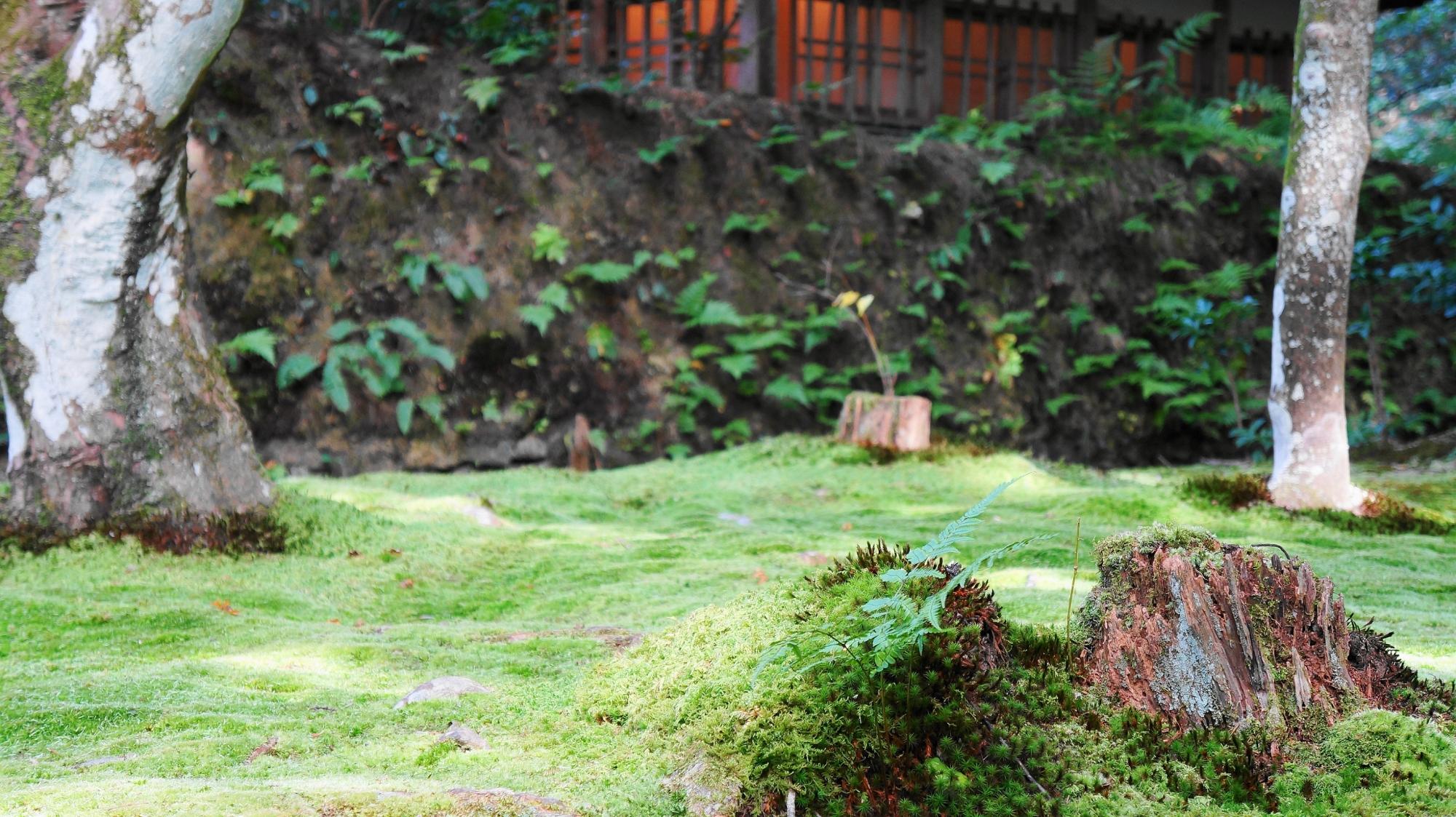 法然院の本堂横の苔とシダ