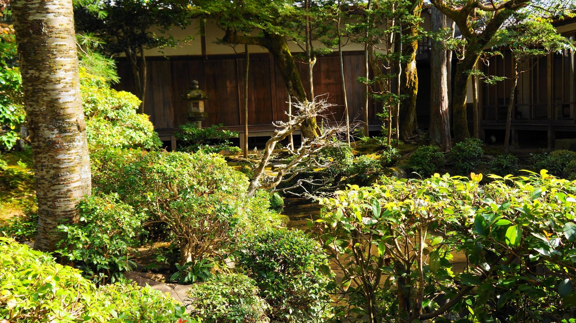 法然院の趣きある本堂中庭