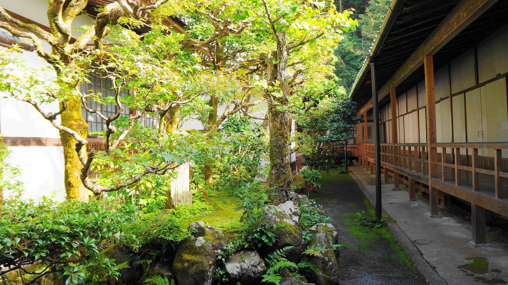 名所の法然院の本堂中庭 11月4日