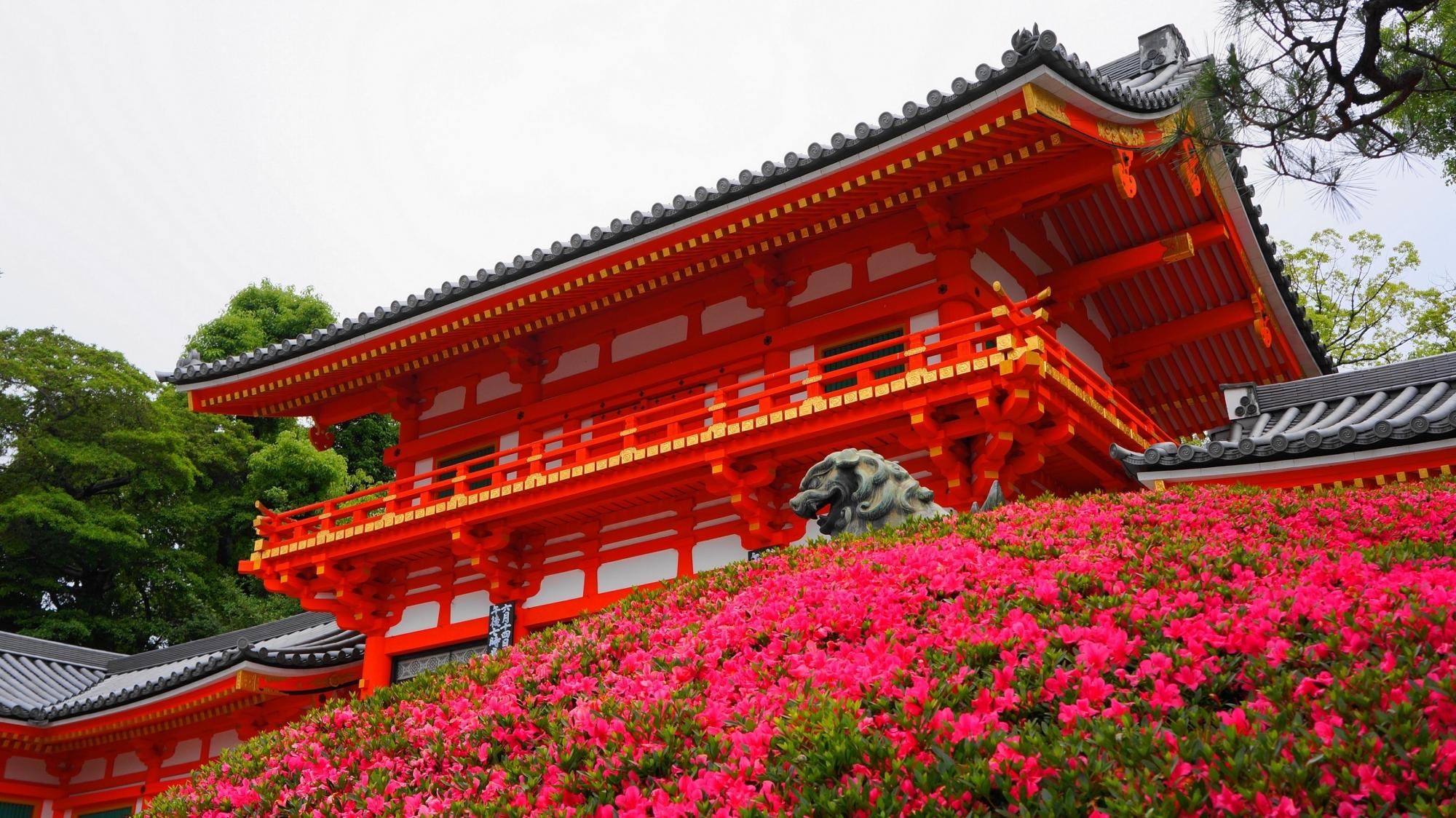 八坂神社の西楼門と見ごろの鮮やかなサツキ