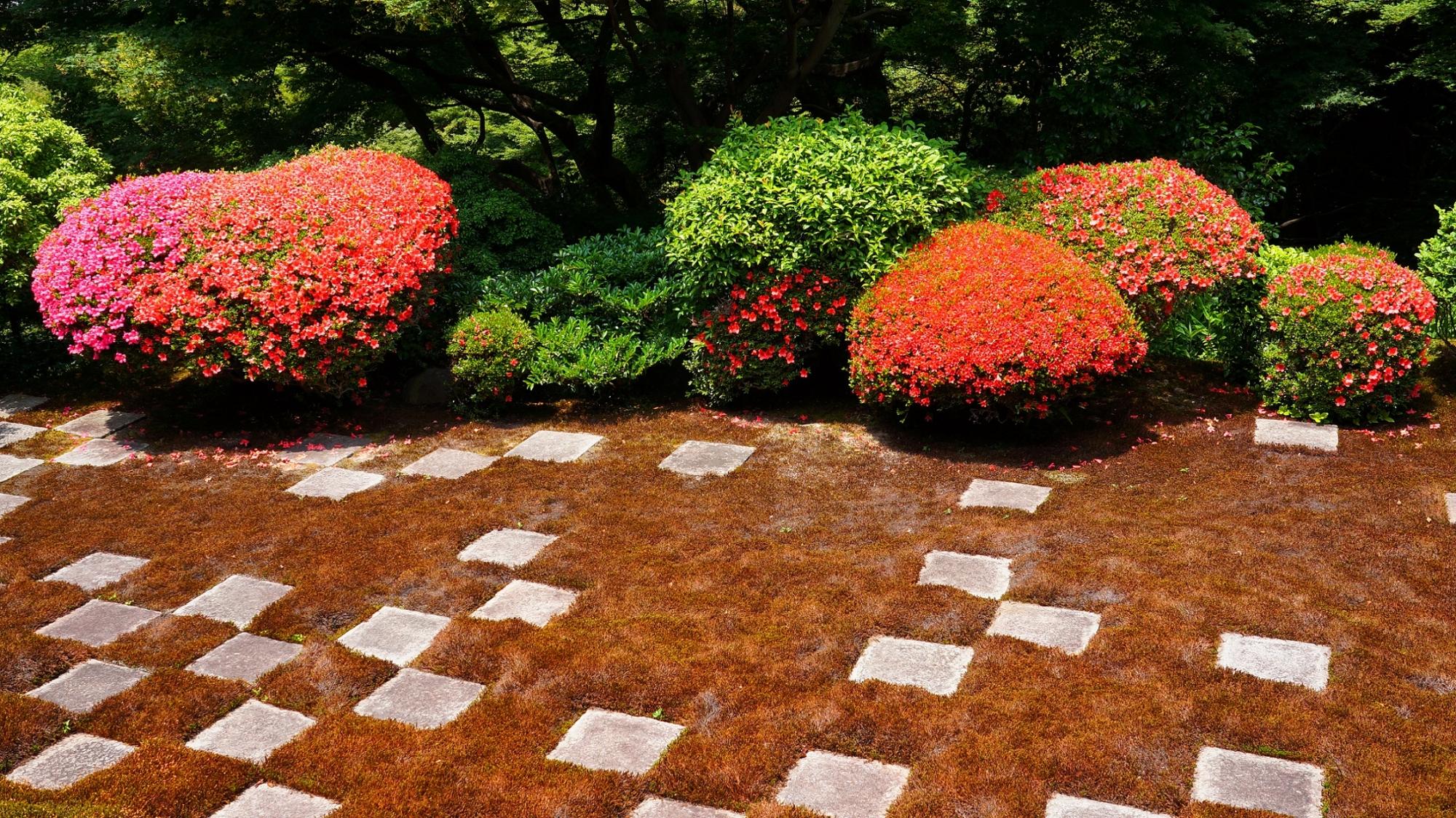 東福寺の方丈庭園北庭の可愛い刈り込みに煌く色とりどりのサツキの花