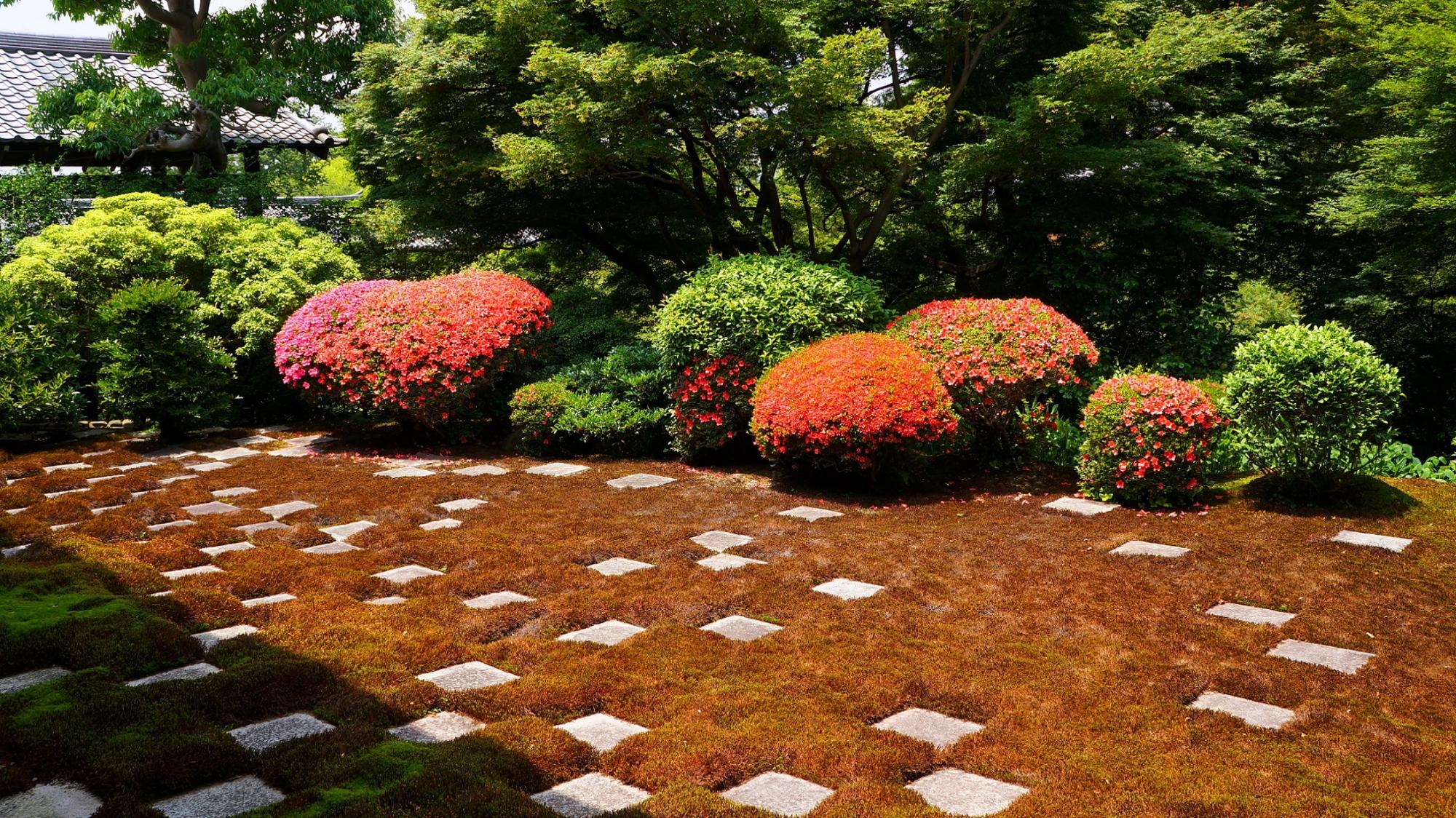 サツキが見ごろの東福寺の方丈庭園北庭