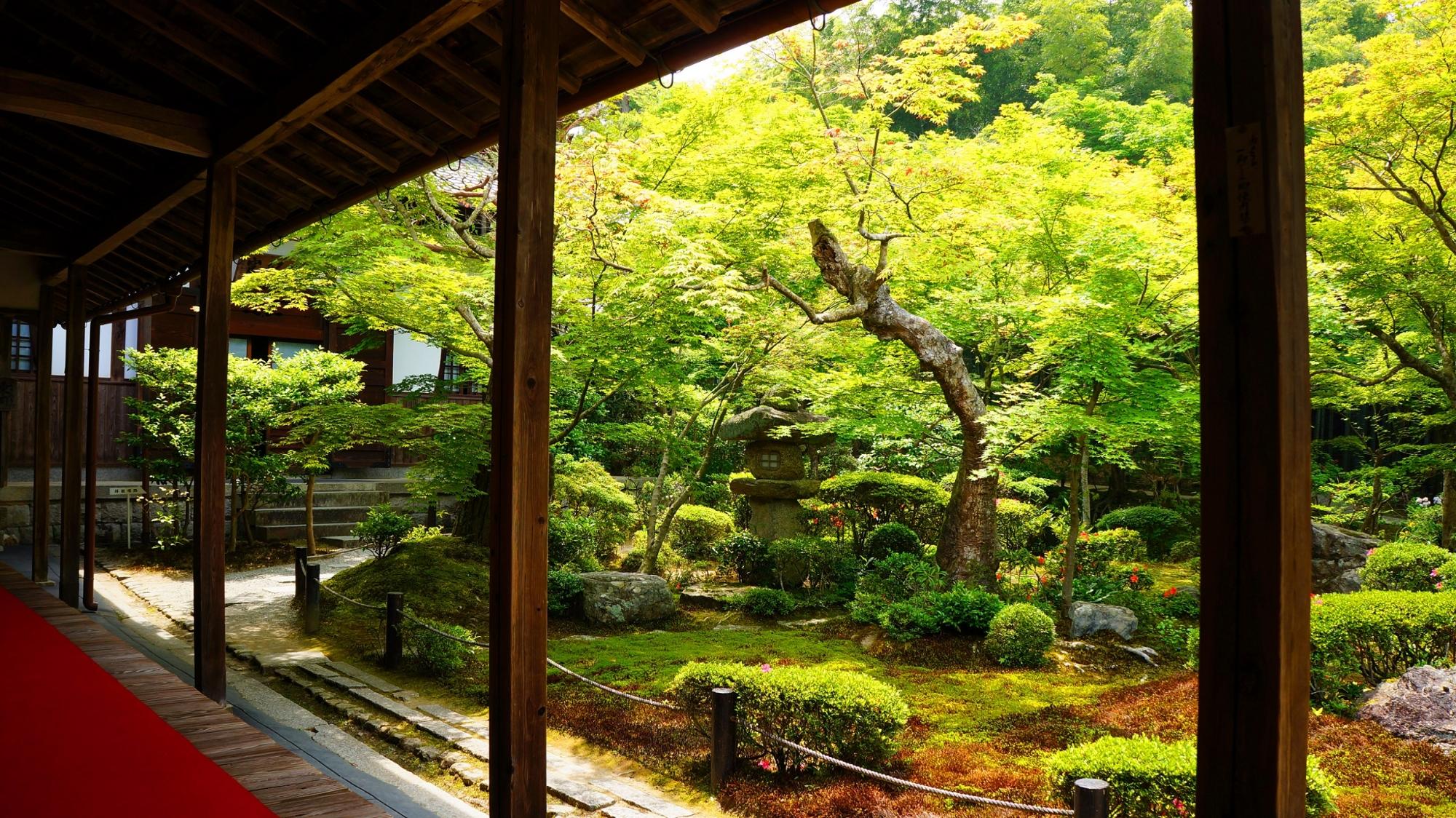 圓光寺の十牛之庭の綺麗な青もみじと新緑