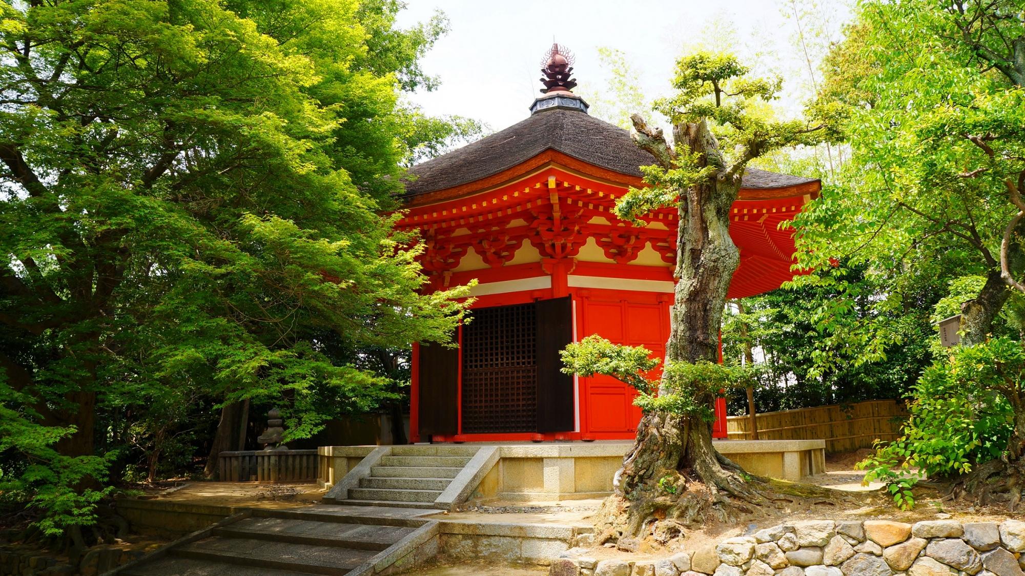 東福寺の赤い愛染堂と溢れる新緑