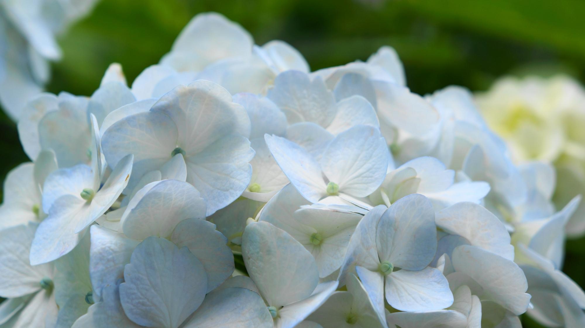 賑やかに咲く可憐な花びらが