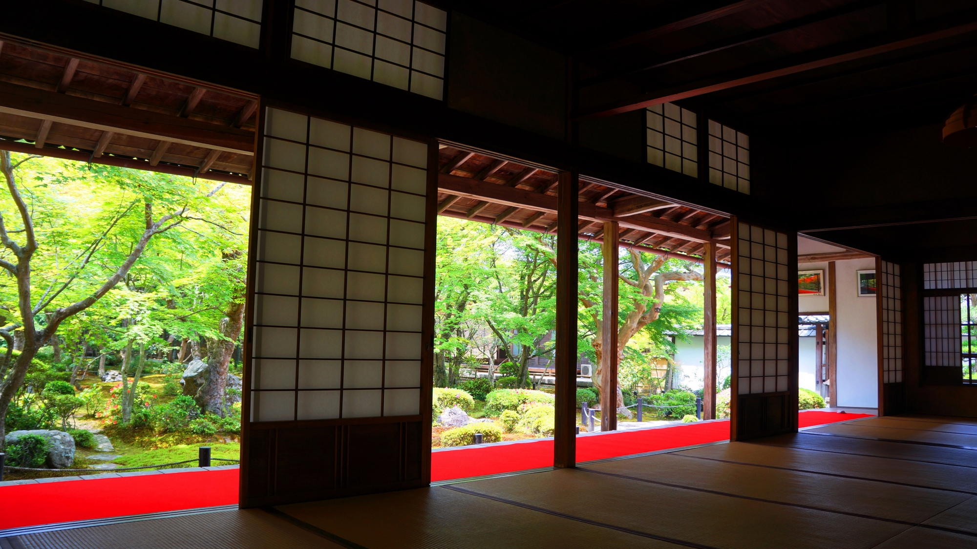 圓光寺の書院奥から眺めた十牛之庭の見事な青もみじと新緑 2013年6月5日