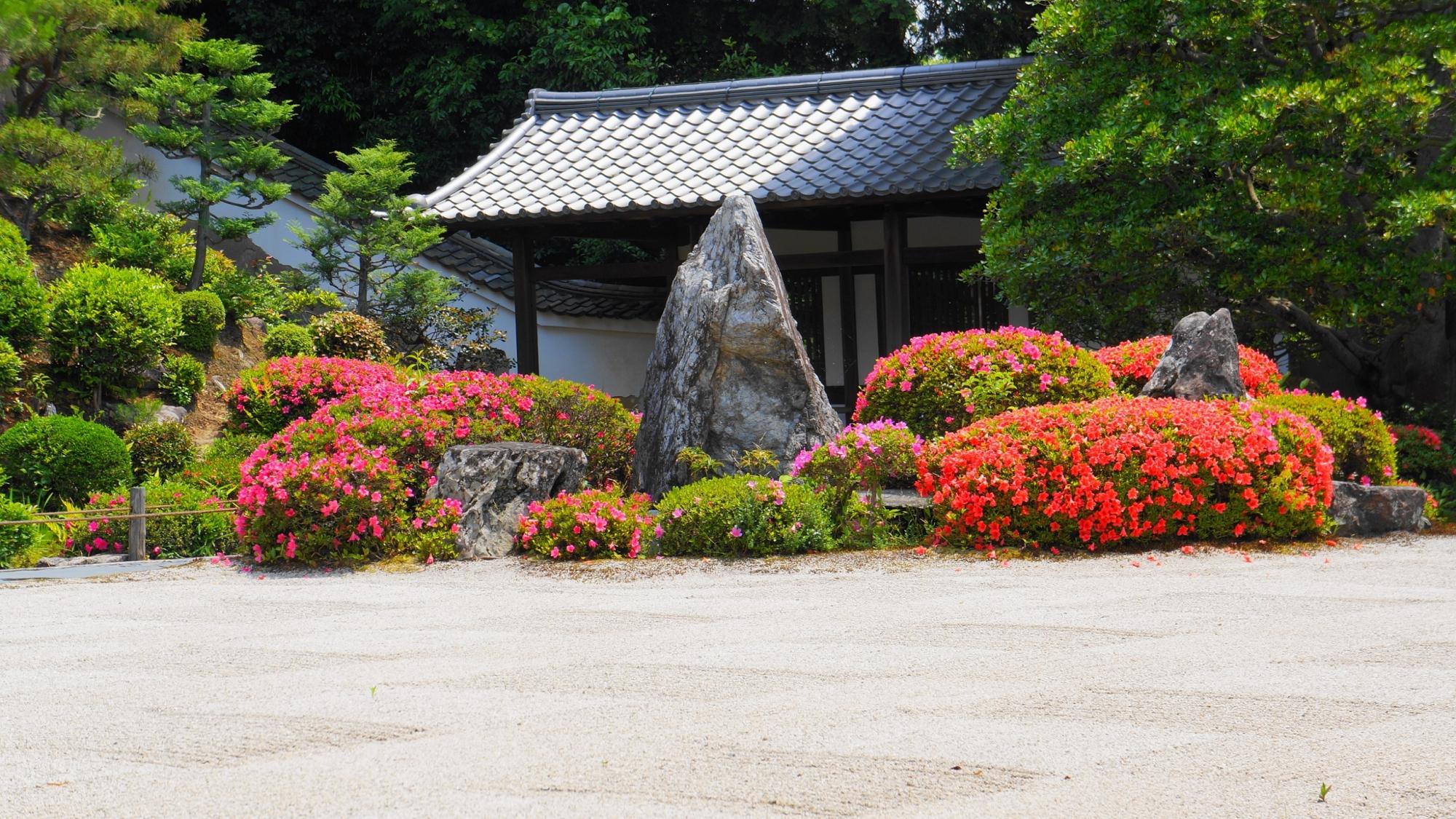 東福寺開山堂庭園の白砂に映える煌びやかなサツキ