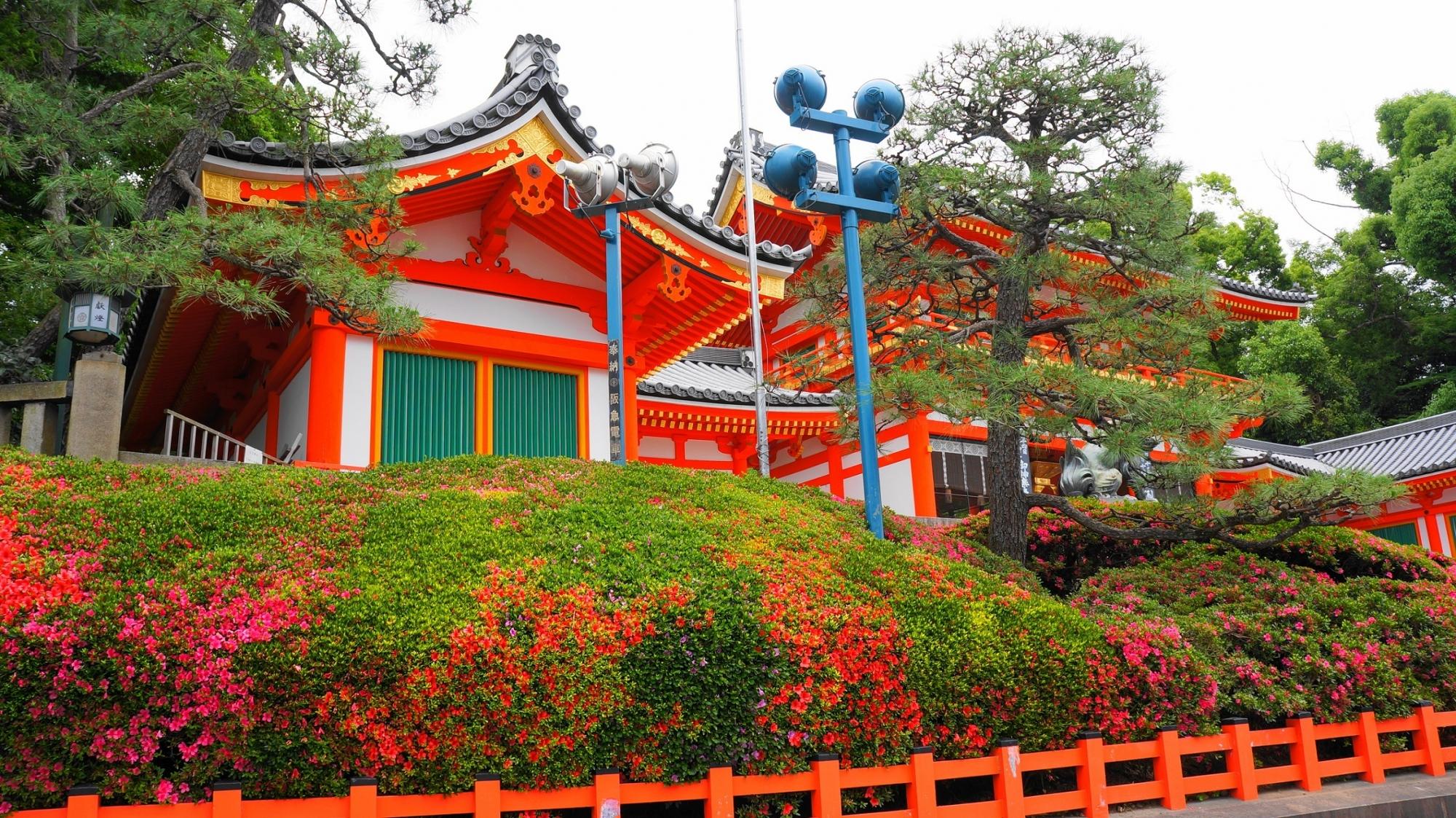 八坂神社の西楼門の北側の咲き始めのさつき