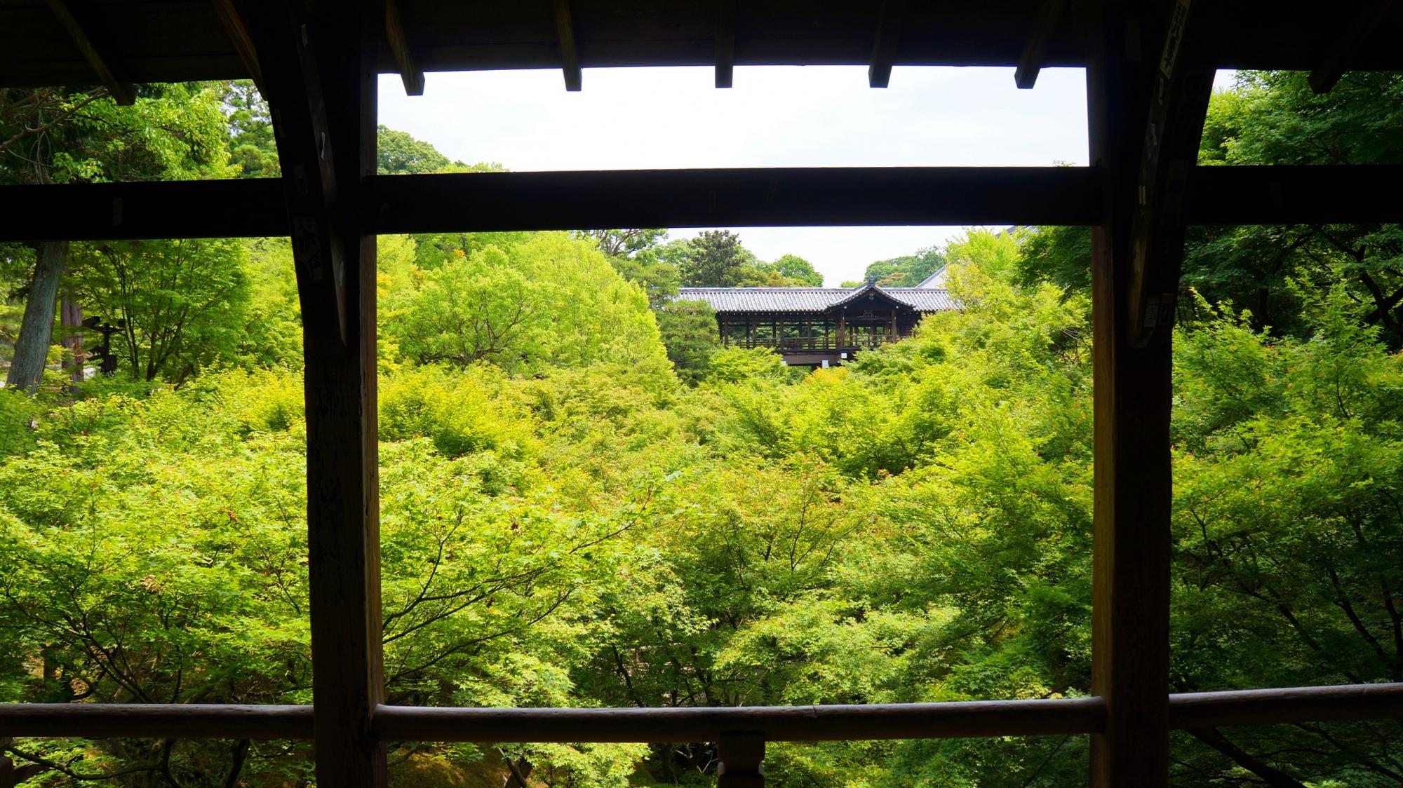 東福寺の臥雲橋からの通天橋の眺めの広がる新緑の海