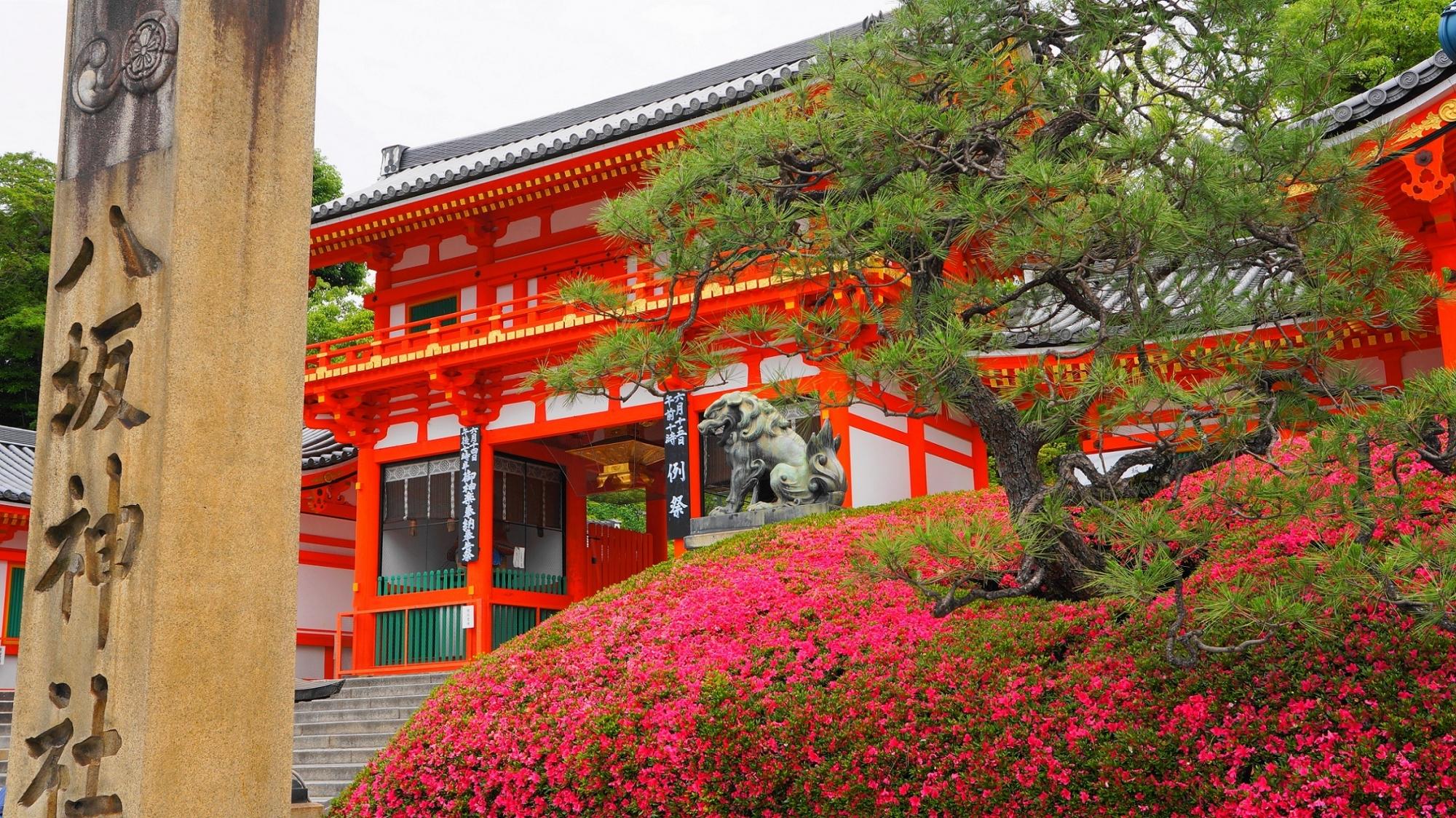 八坂神社の西楼門と見ごろのさつき