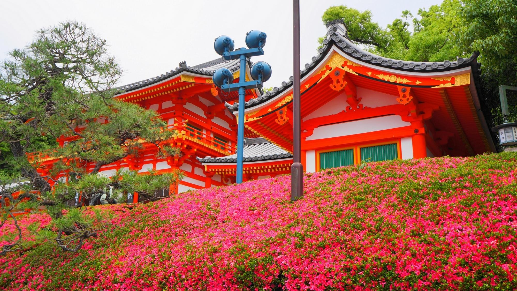 サツキの名所の八坂神社の西楼門と満開のさつき