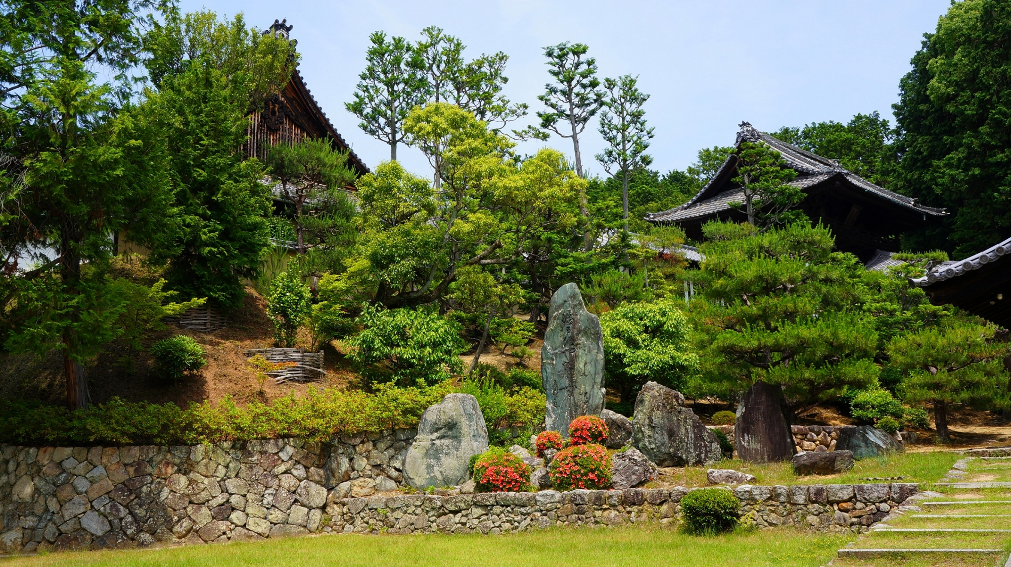 多種多様な緑に煌くサツキが彩りをそえる開山堂前
