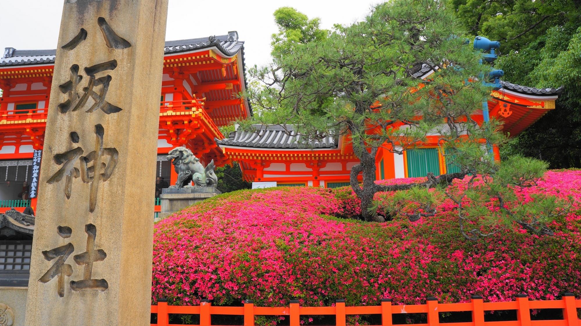 八坂神社の西楼門と見ごろの優美なさつき