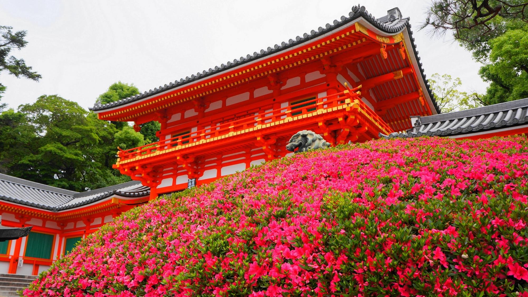 京都八坂神社の西楼門と満開のさつき