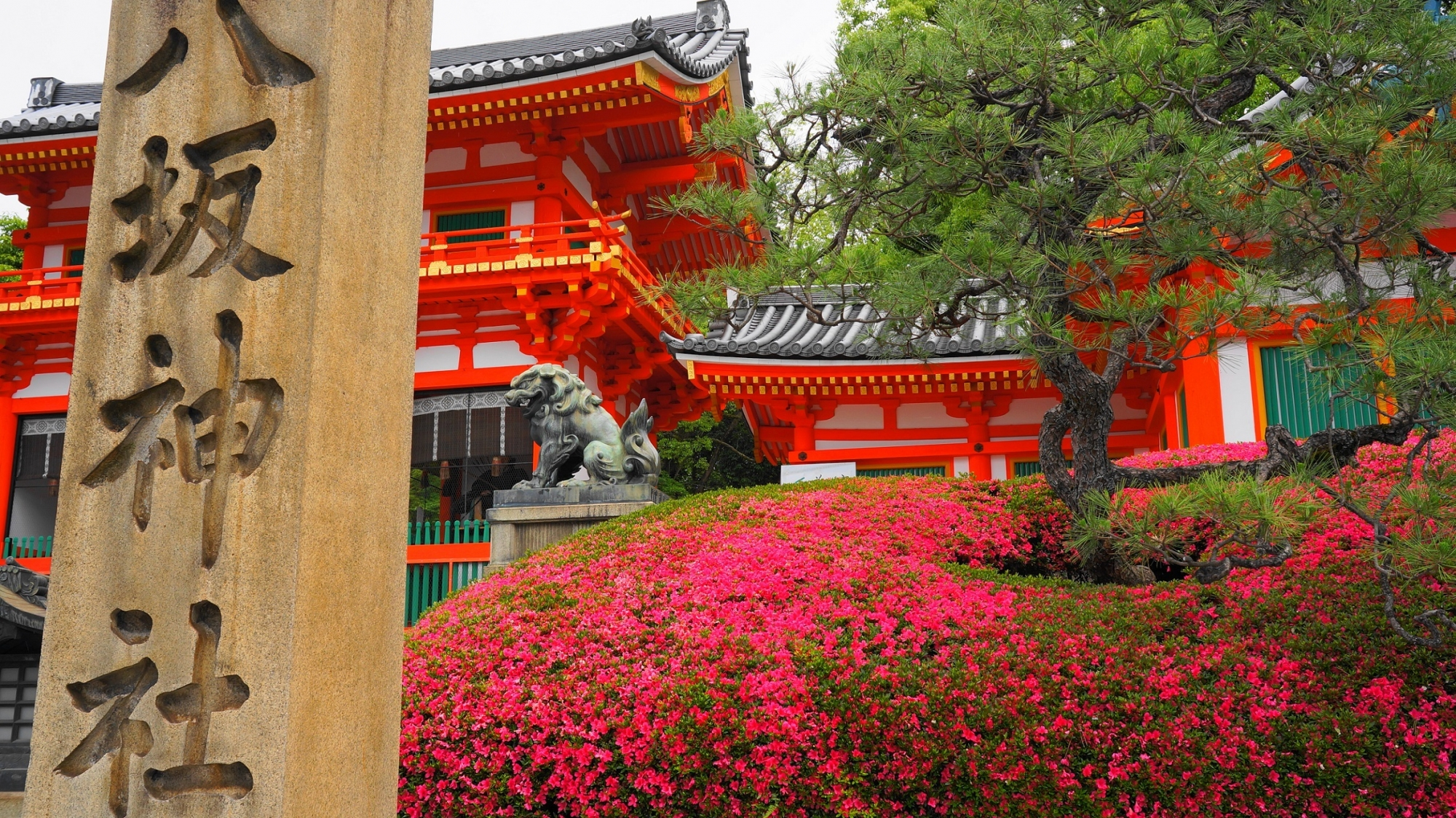 Yasaka-jinja Shrine Kyoto Azalea 満開 サツキ 華やか 八坂神社 西楼門
