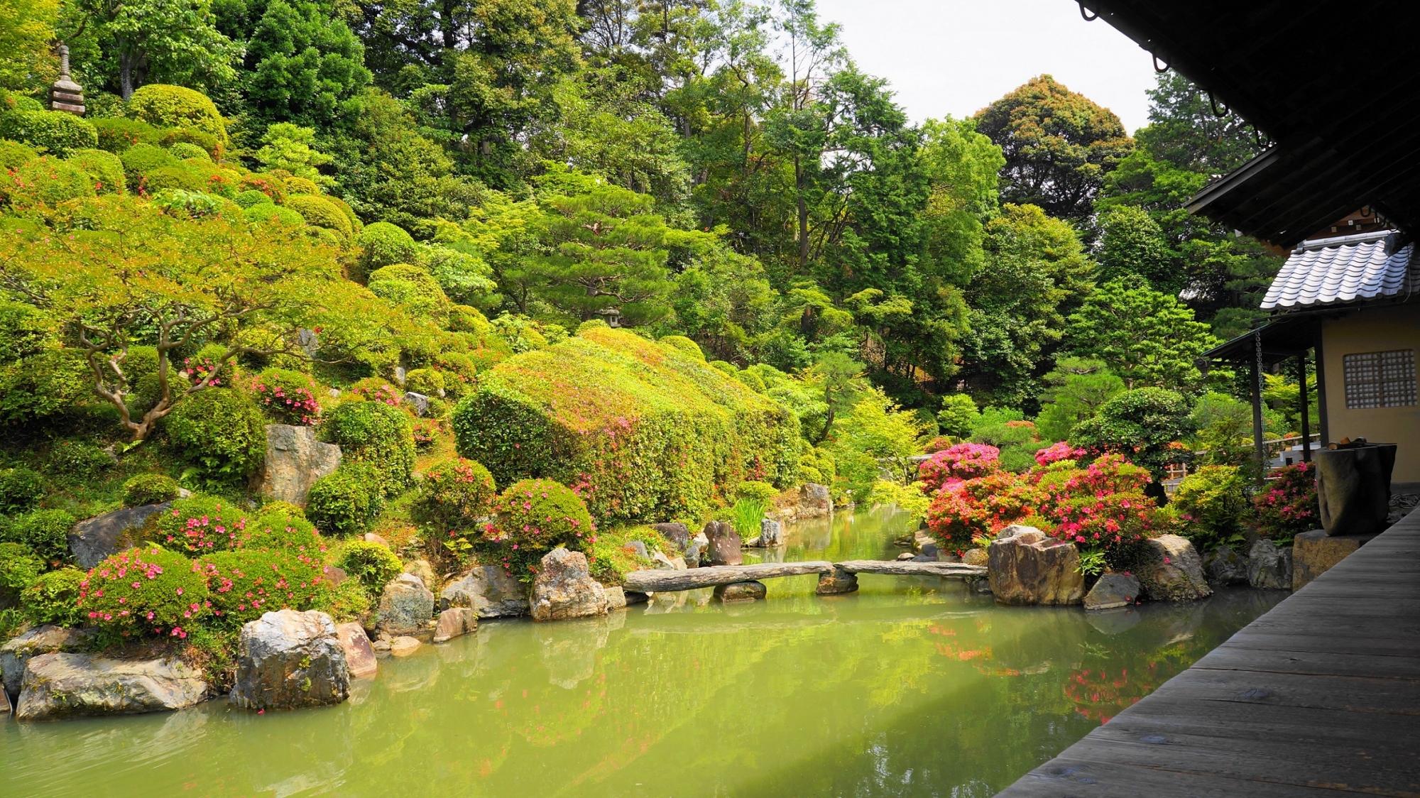智積院の名勝庭園の見ごろのさつき