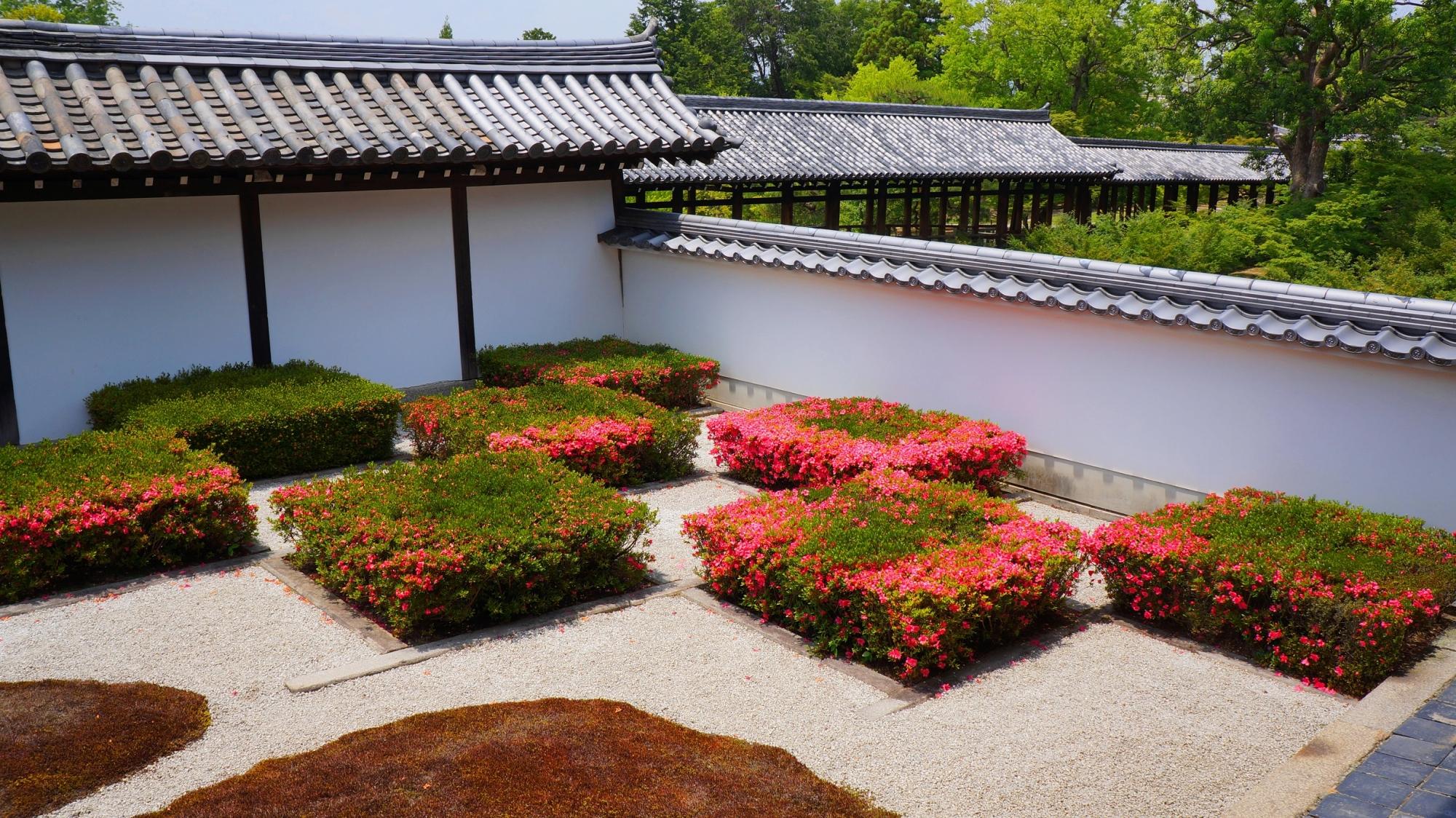 方丈庭園西庭の四角い皐月の刈り込みに咲くピンクの花