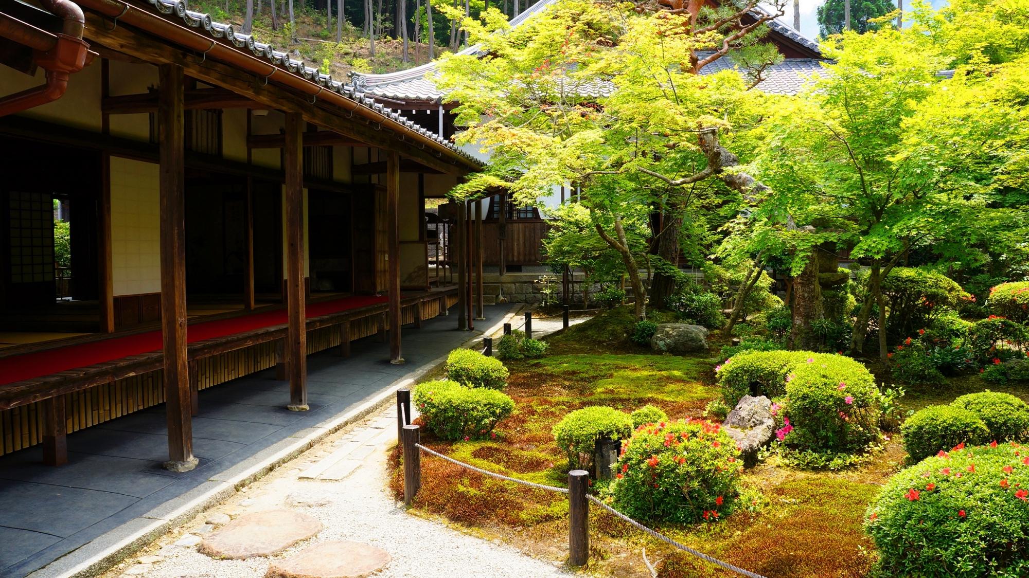 圓光寺の十牛之庭と書院と青もみじと新緑