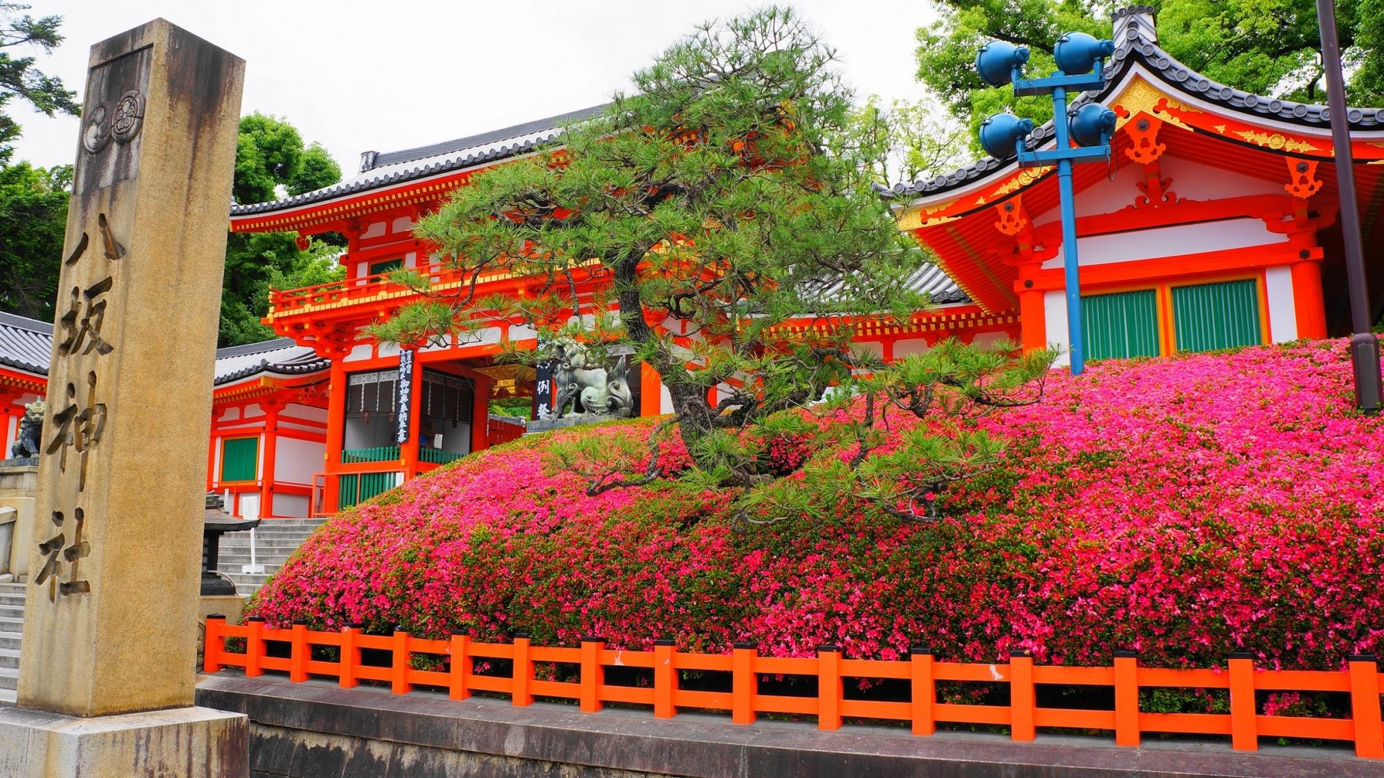 八坂神社の西楼門と綺麗な見ごろのさつき