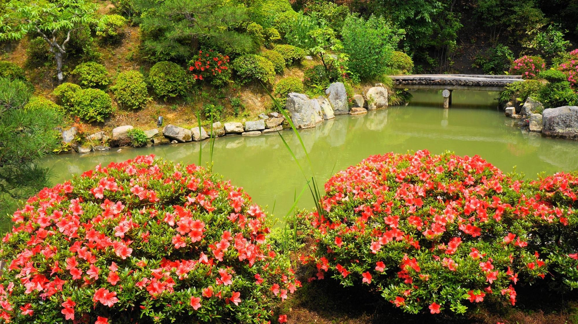 智積院の名勝庭園の見ごろの華やかなさつき 6月5日
