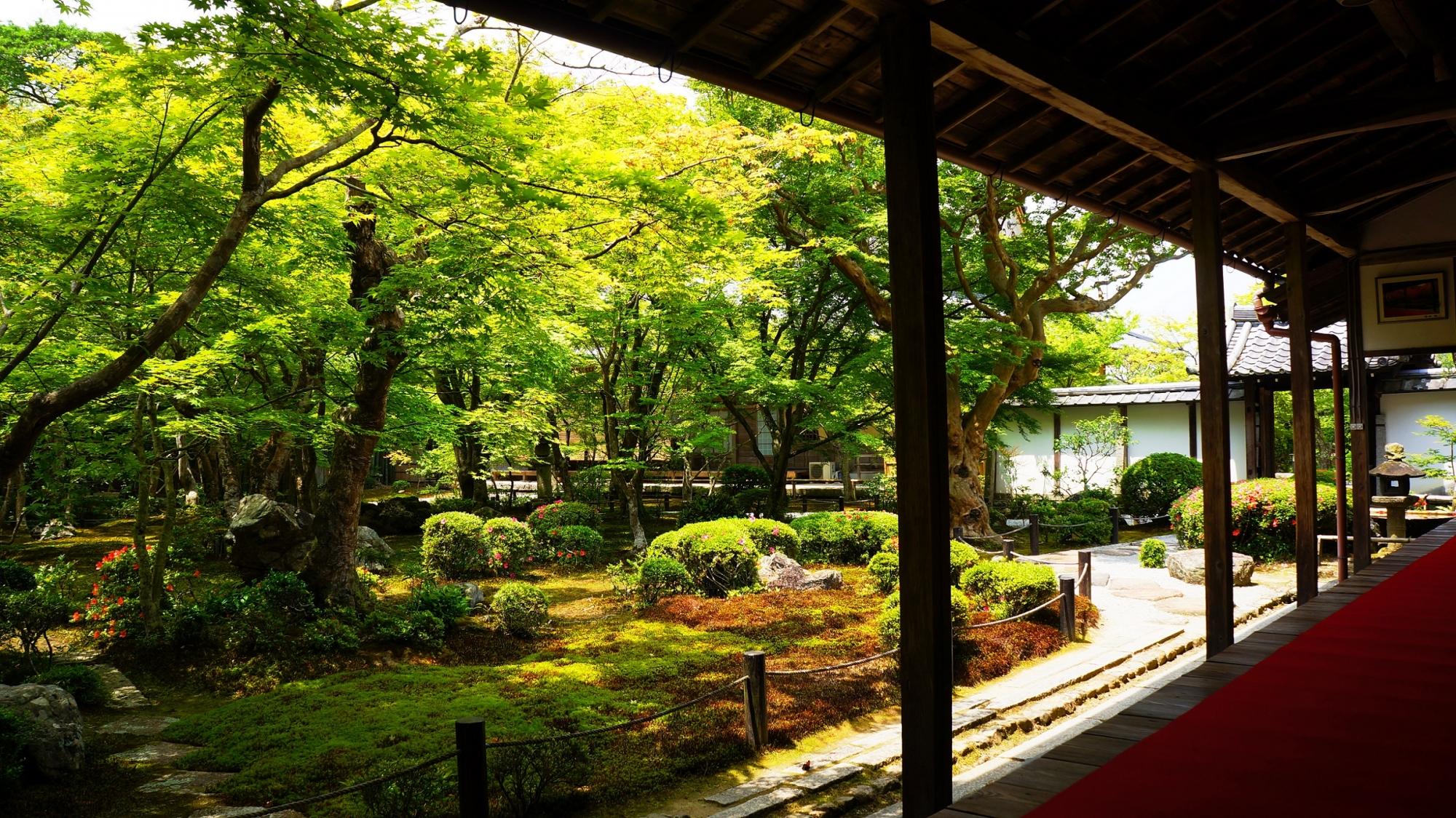 独り占めの緑の庭園