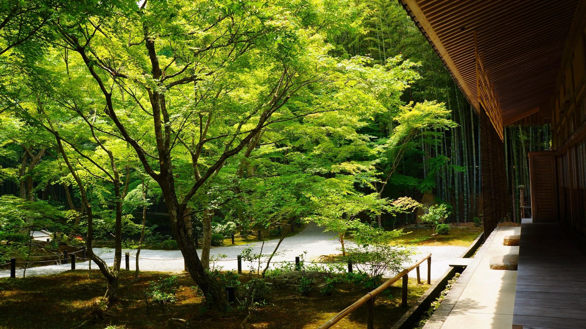 京都圓光寺の十牛之庭と書院と青もみじと新緑