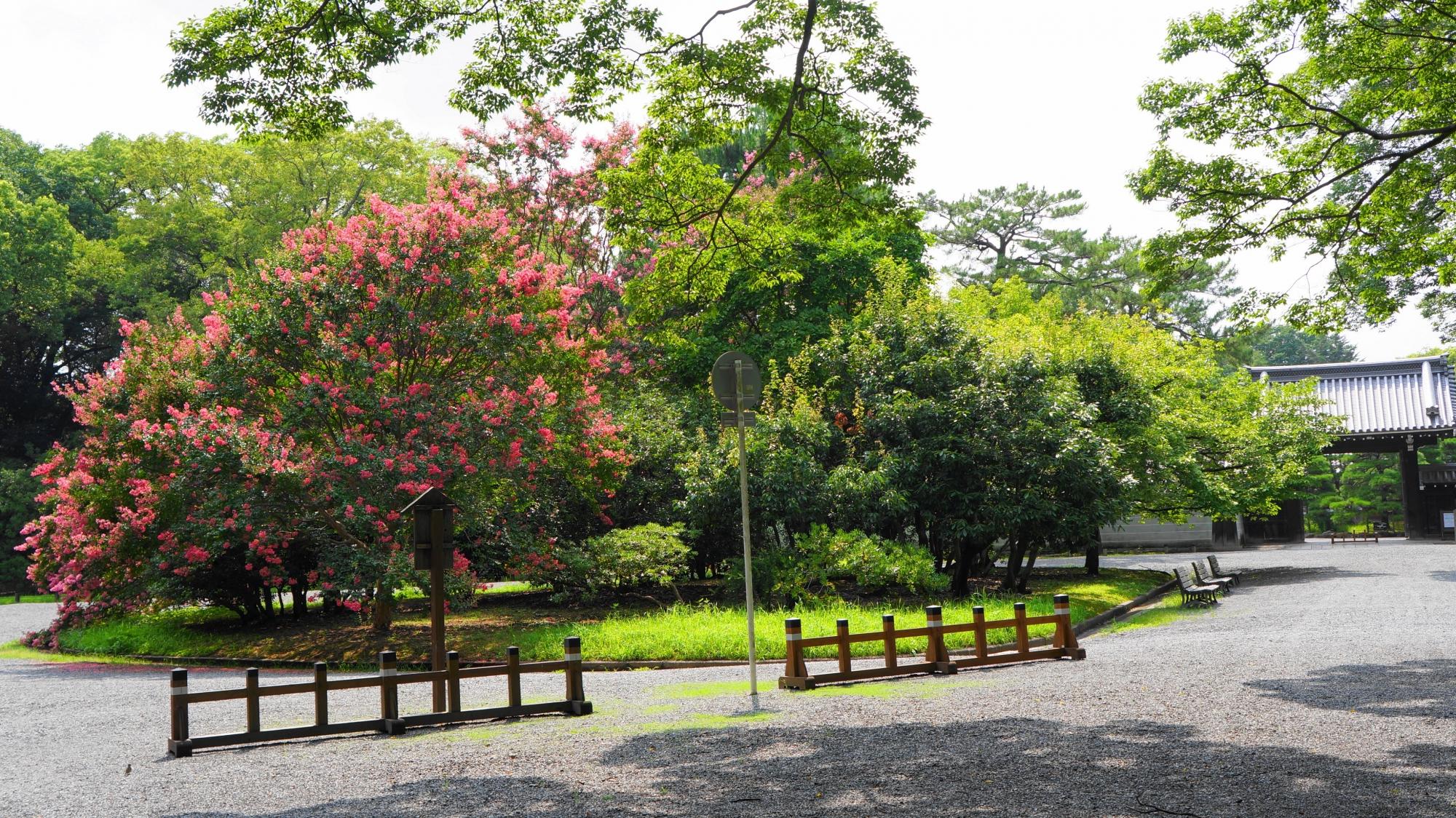眩い緑とピンクにつつまれる夏の京都御苑と右奥に見える閑院宮邸跡
