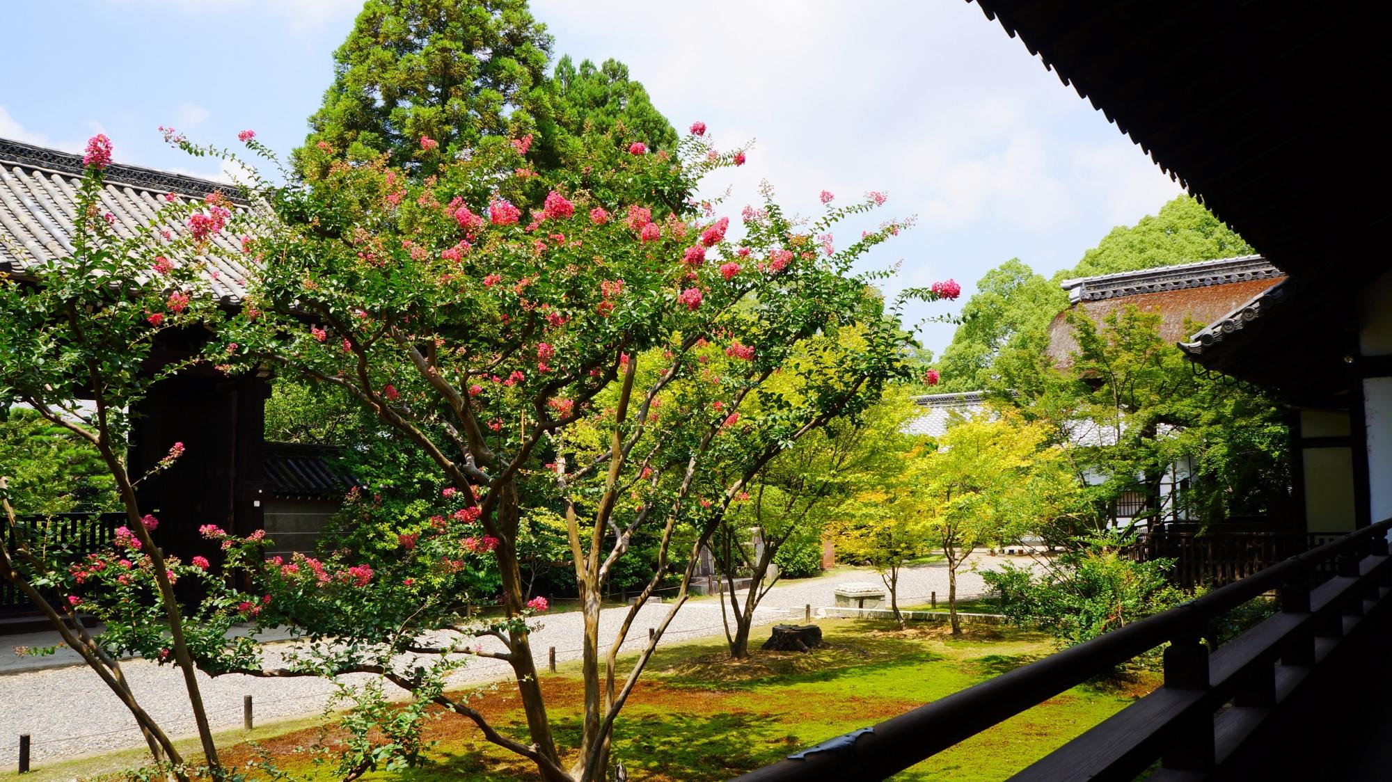 青蓮院の宸殿から眺めた四脚門と百日紅(サルスベリ)