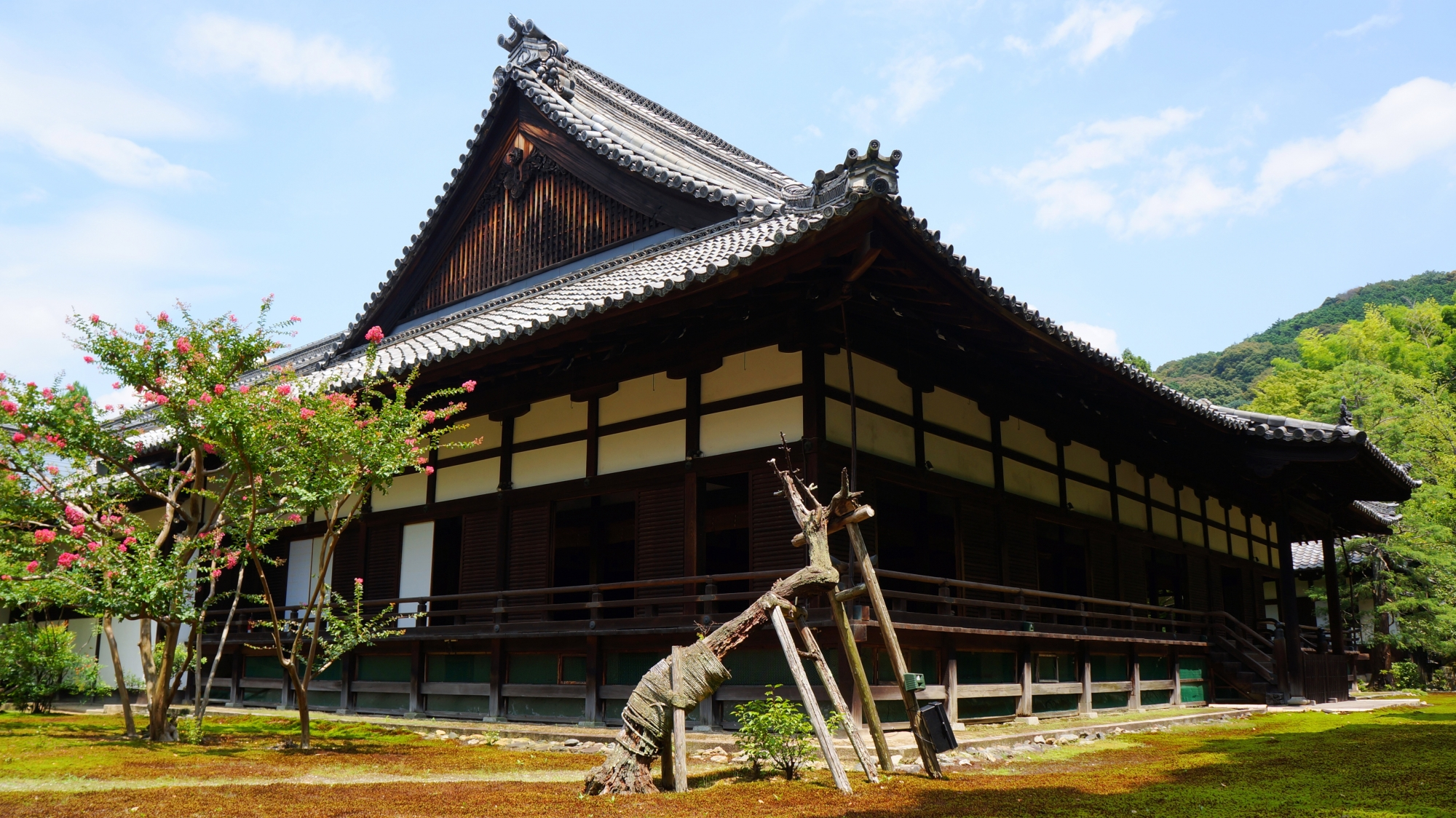 青蓮院の宸殿と夏を彩るサルスベリ