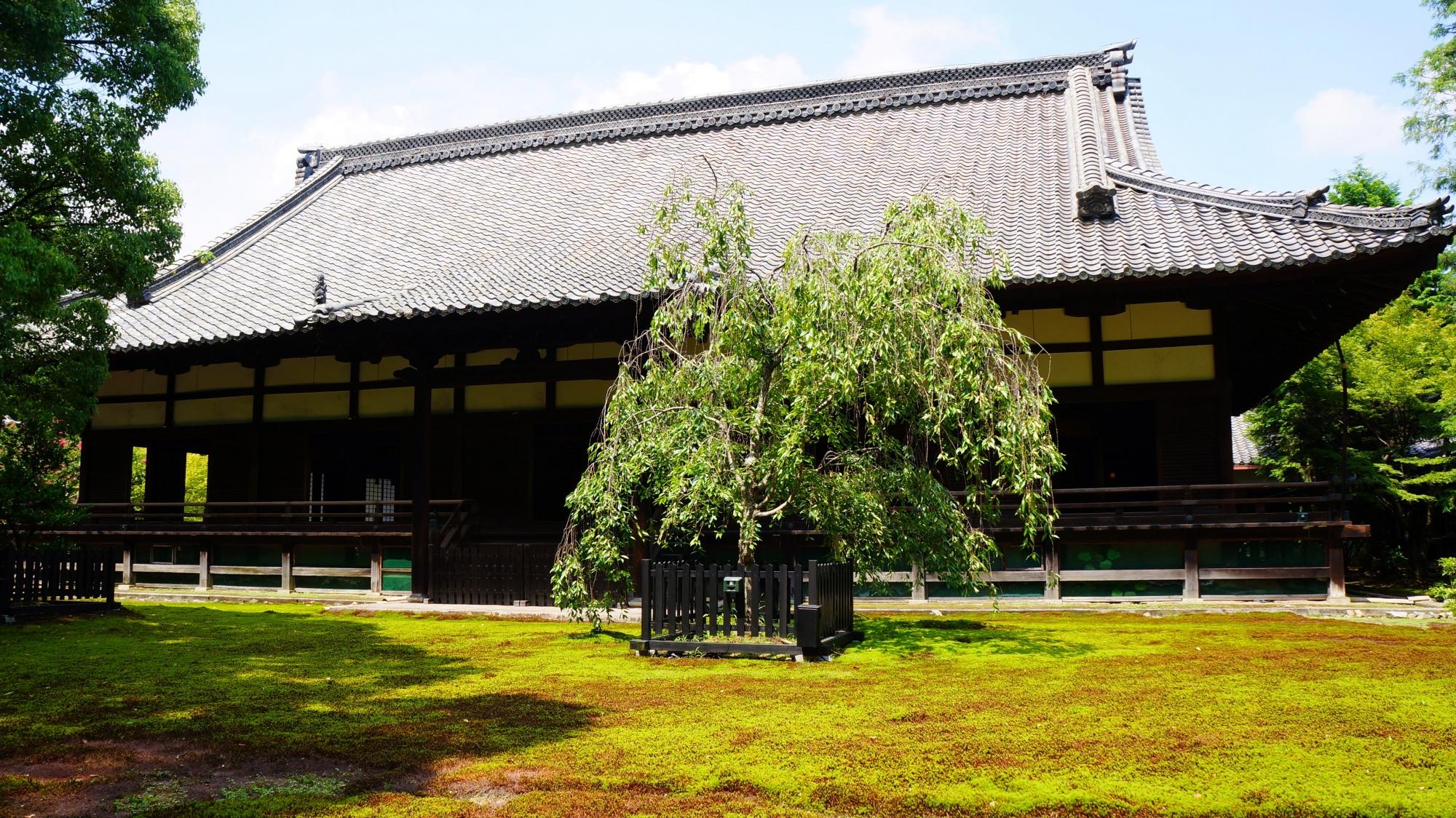 青蓮院の雄大な造りの宸殿